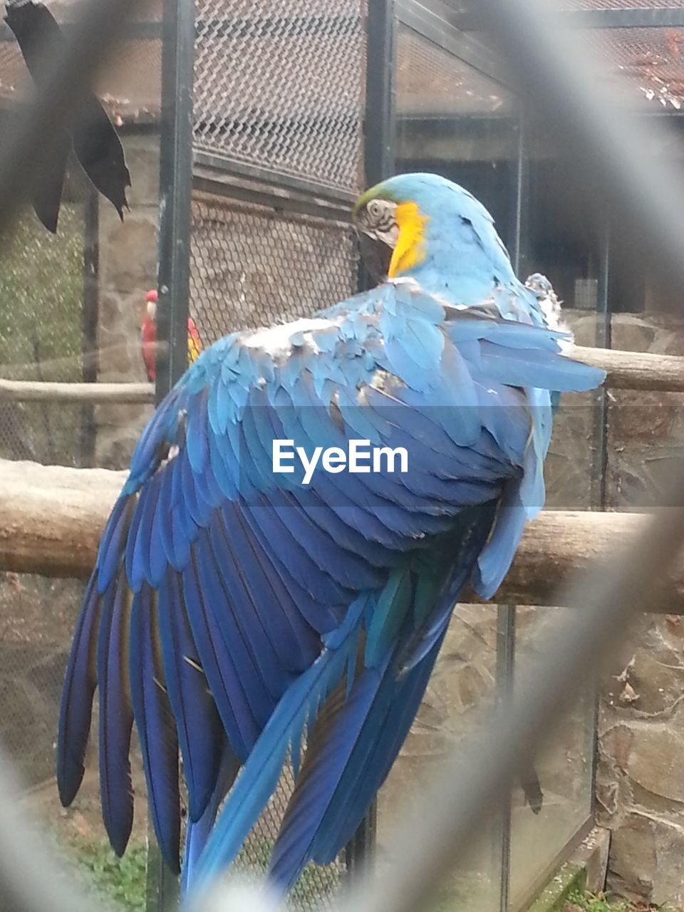 bird, animal themes, animals in the wild, parrot, animal wildlife, blue, gold and blue macaw, macaw, cage, one animal, perching, animals in captivity, no people, day, nature, close-up, outdoors, beauty in nature, spread wings