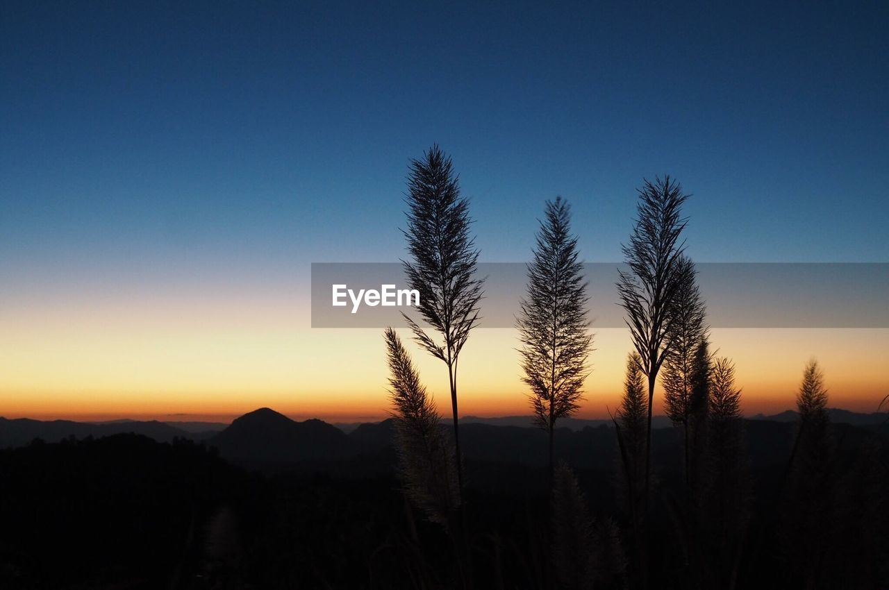 silhouette, nature, copy space, sunset, blue, tranquil scene, no people, beauty in nature, growth, scenics, tranquility, clear sky, landscape, tree, sky, outdoors