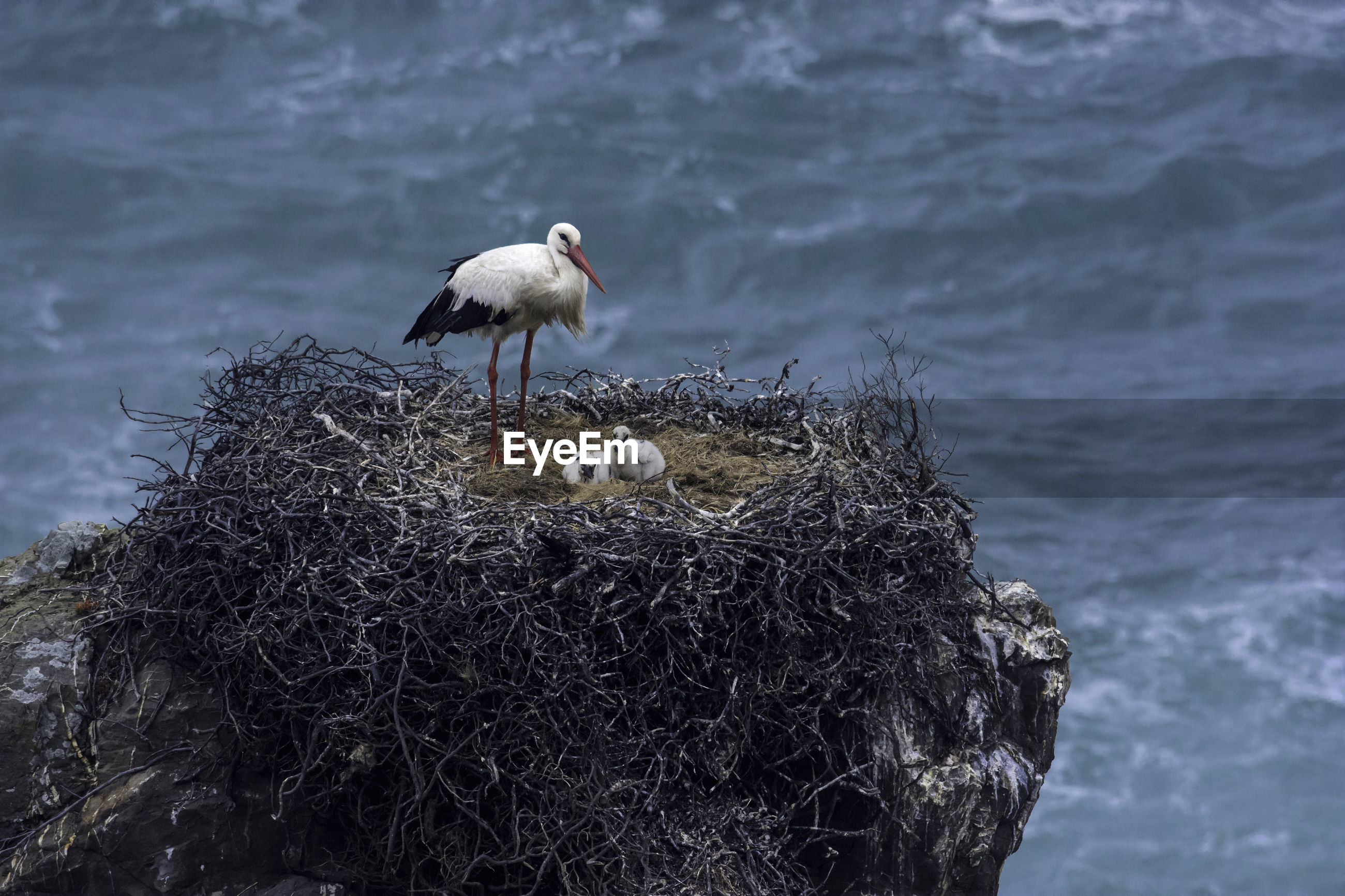 Stork with young bird perching on nest by sea