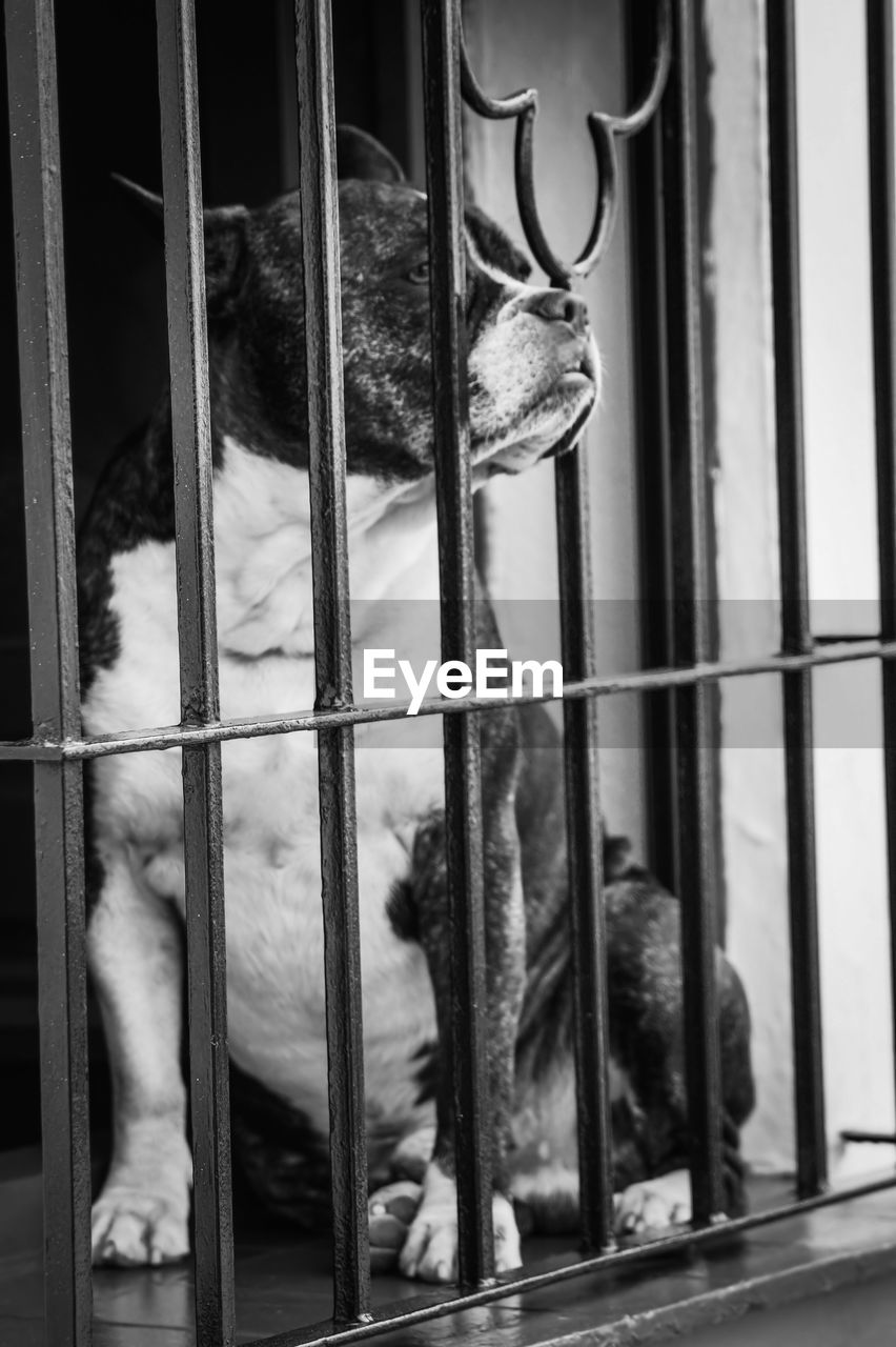 animal, animal themes, mammal, one animal, vertebrate, cage, no people, metal, animals in captivity, focus on foreground, animal wildlife, domestic animals, outdoors, day, domestic, pets, close-up, zoo, animal body part