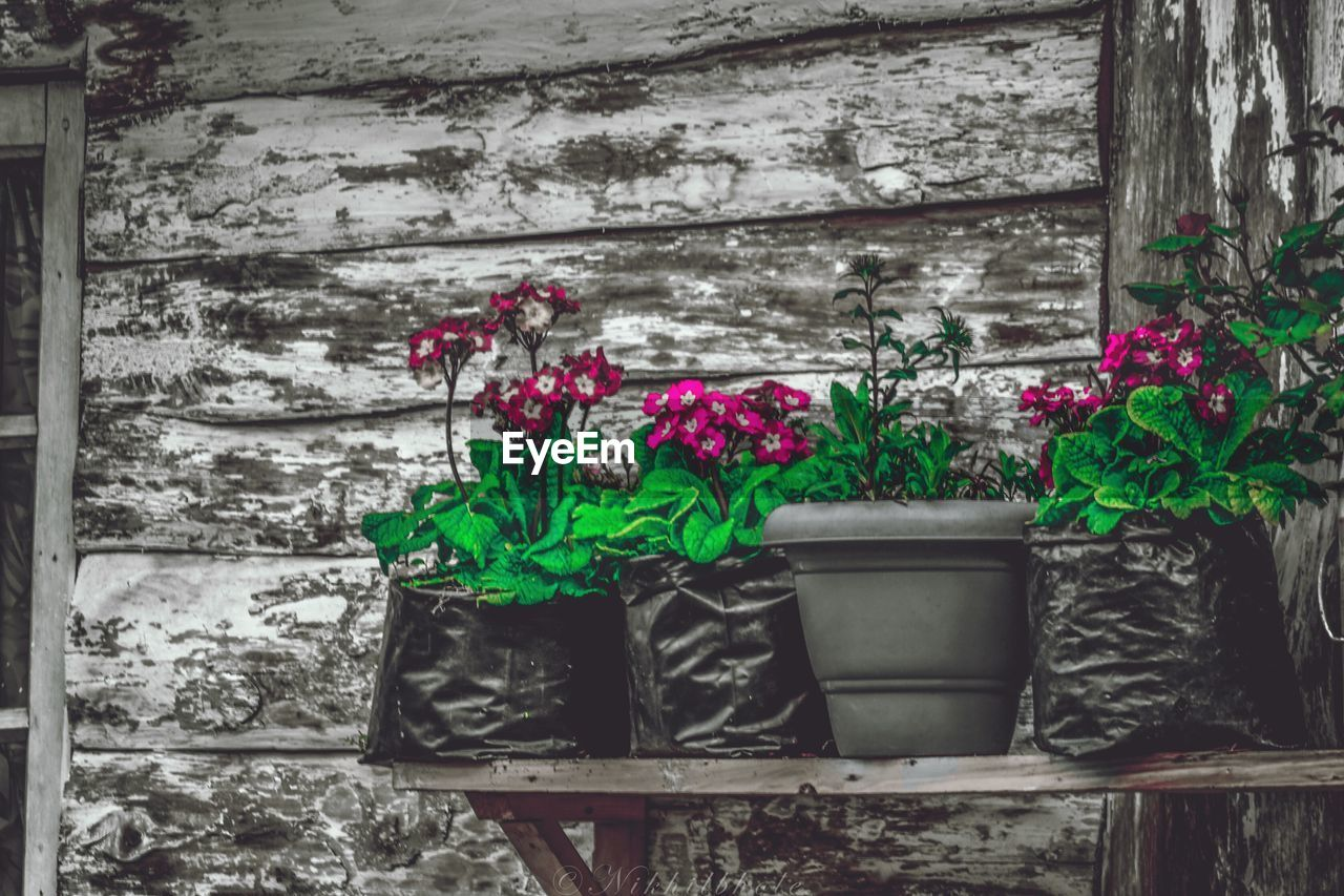 flower, growth, plant, fragility, outdoors, potted plant, day, freshness, nature, green color, no people, leaf, built structure, close-up, window box, building exterior, architecture, beauty in nature
