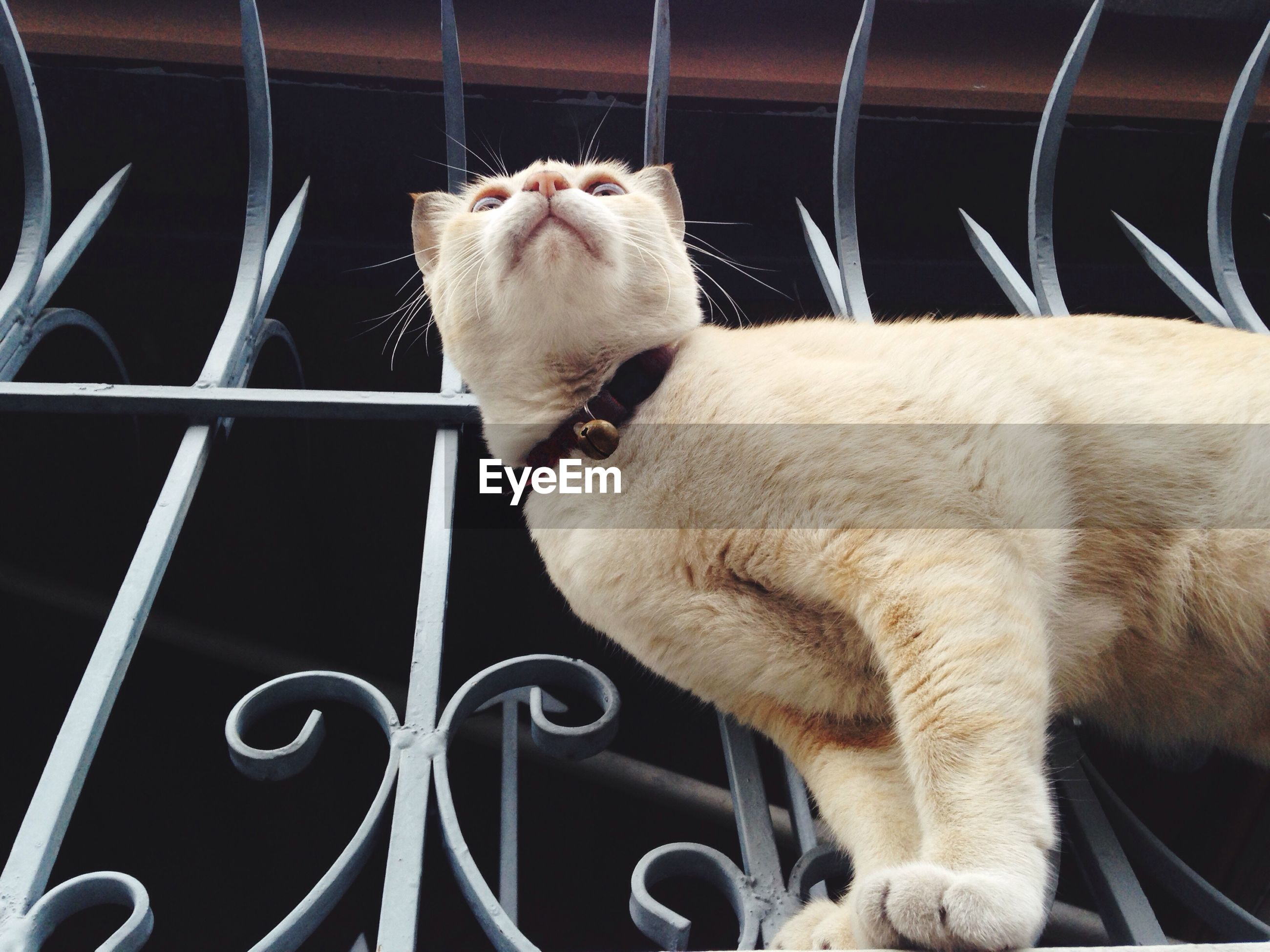 Low angle view of cat at balcony
