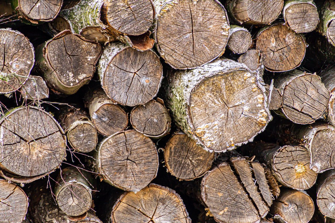 timber, log, wood, full frame, firewood, lumber industry, wood - material, backgrounds, tree, deforestation, stack, forest, large group of objects, woodpile, abundance, nature, pattern, no people, fuel and power generation, textured, outdoors
