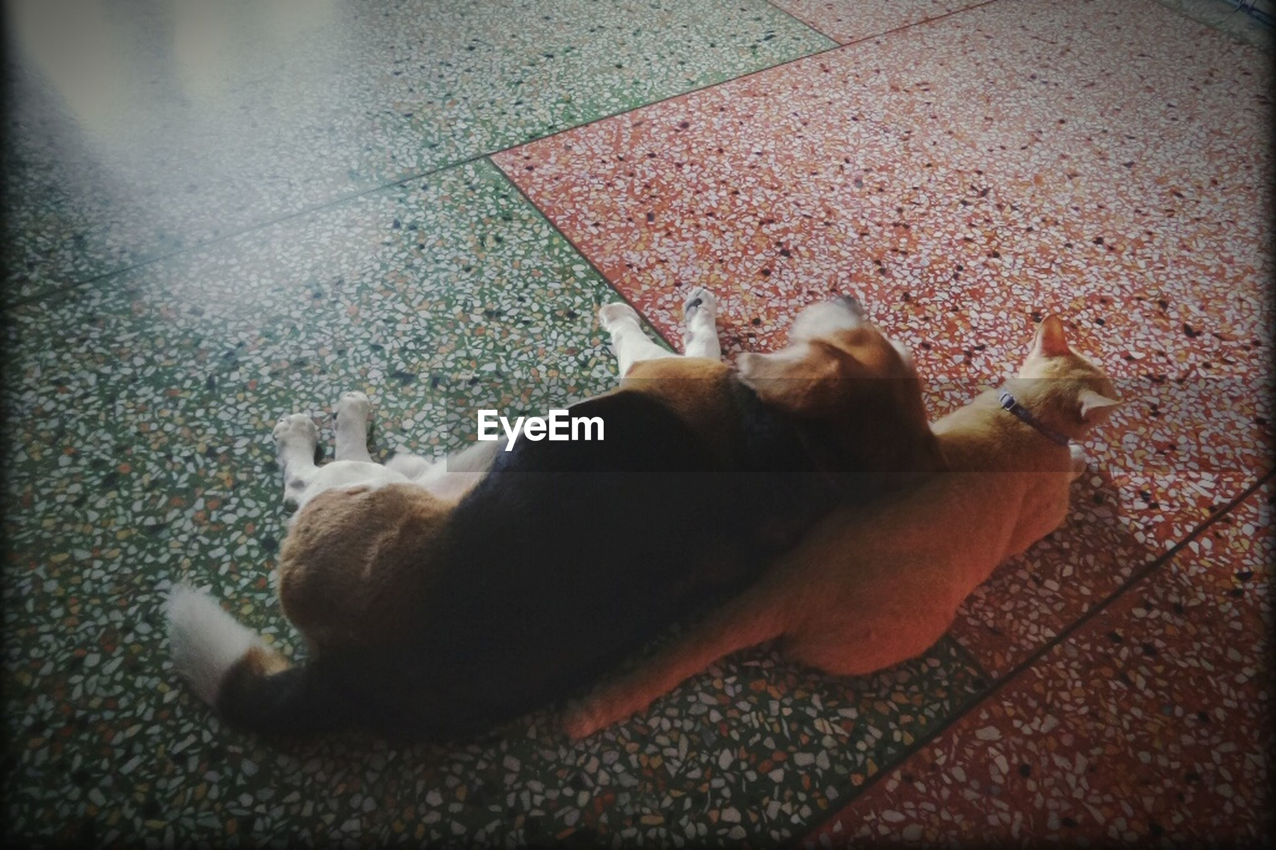 pets, domestic animals, dog, mammal, relaxation, lying down, resting, day, elevated view