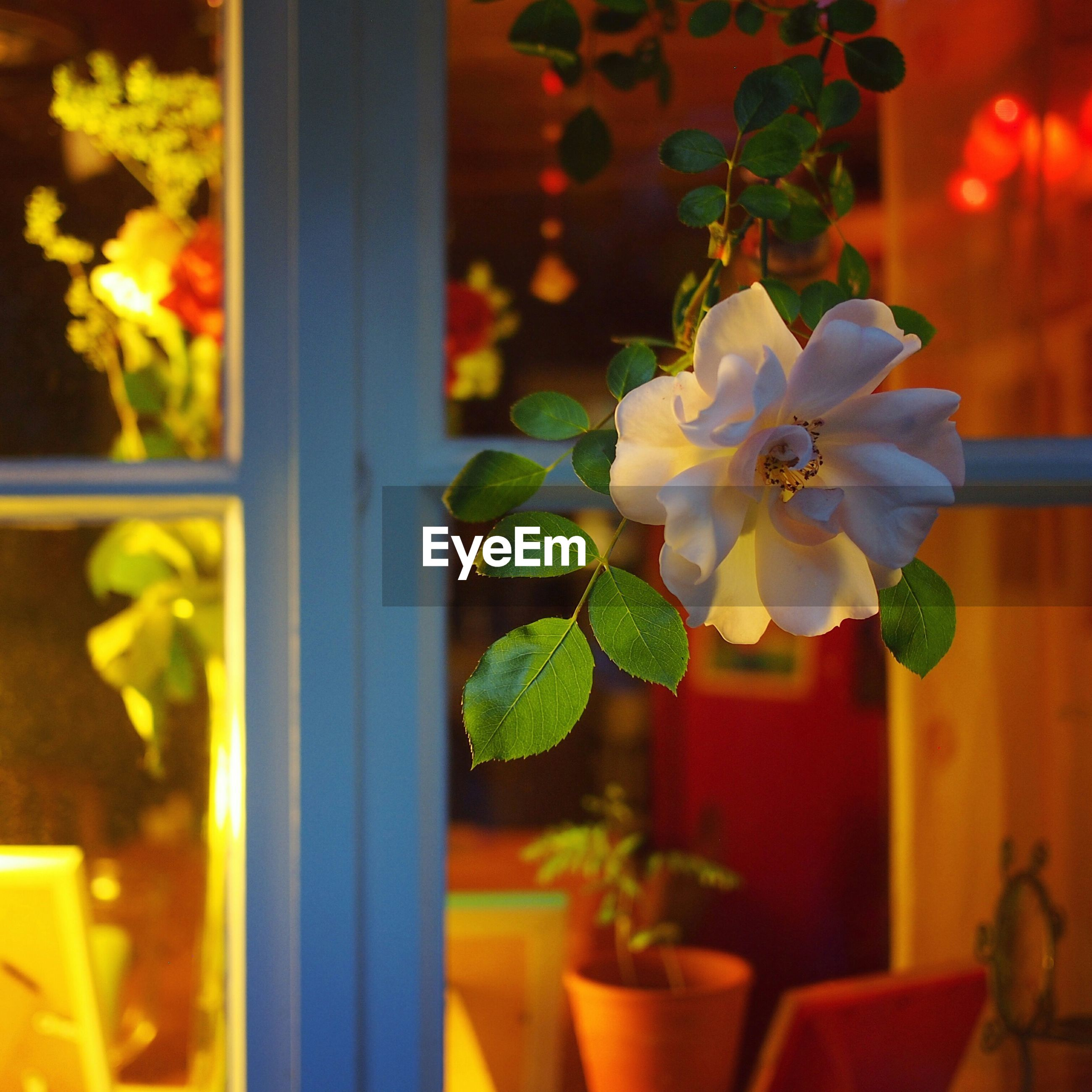 Close-up of flower growing against window
