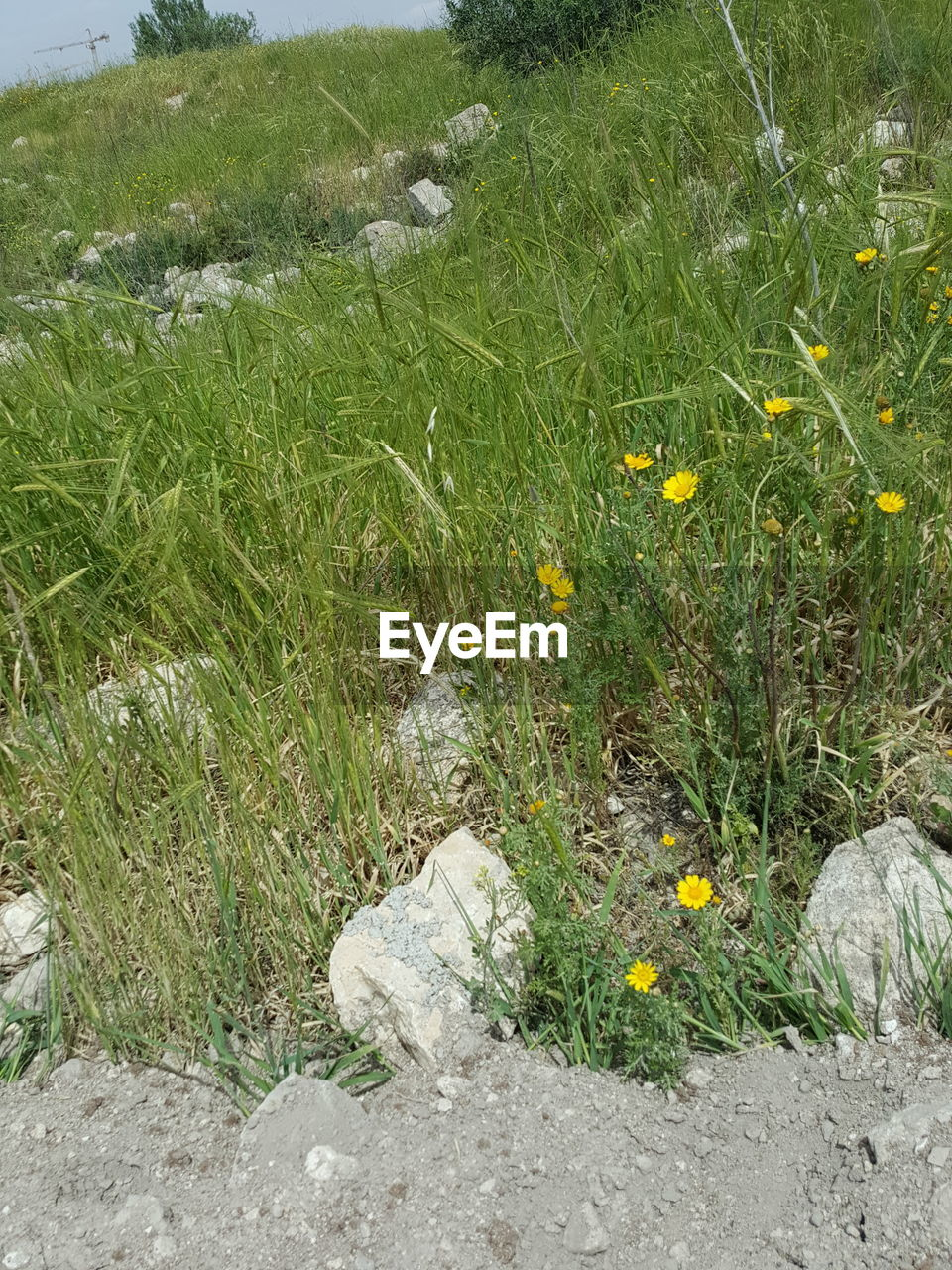 plant, growth, flowering plant, flower, grass, green color, nature, land, no people, field, day, beauty in nature, high angle view, fragility, vulnerability, freshness, outdoors, tranquility, rock, solid