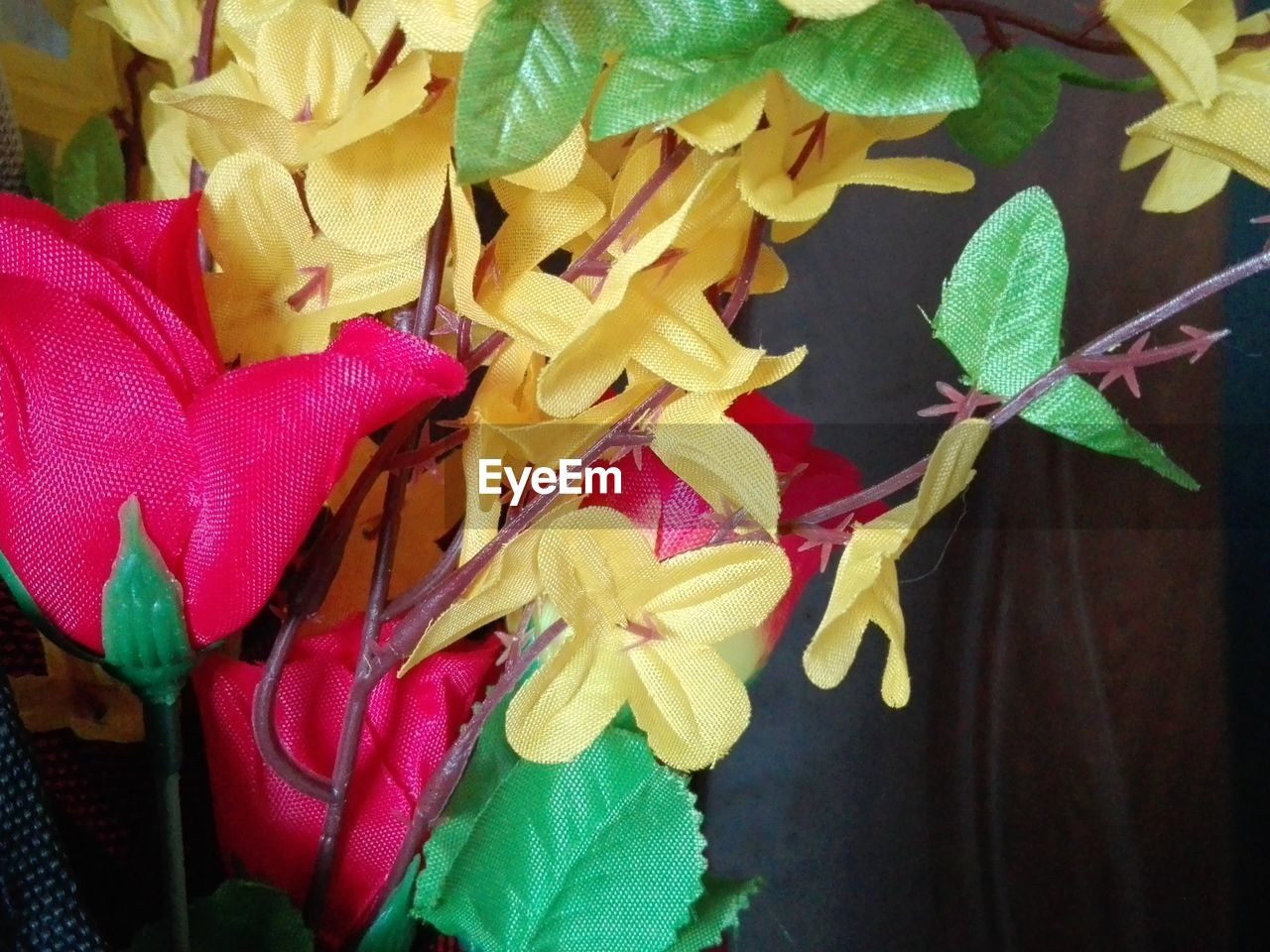 leaf, close-up, no people, flower, freshness, petal, day, yellow, fragility, indoors, nature, flower head
