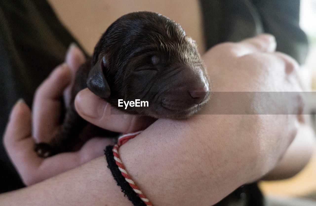 pets, one animal, animal themes, domestic animals, dog, mammal, real people, one person, puppy, indoors, young animal, human hand, holding, close-up, human body part, day, people