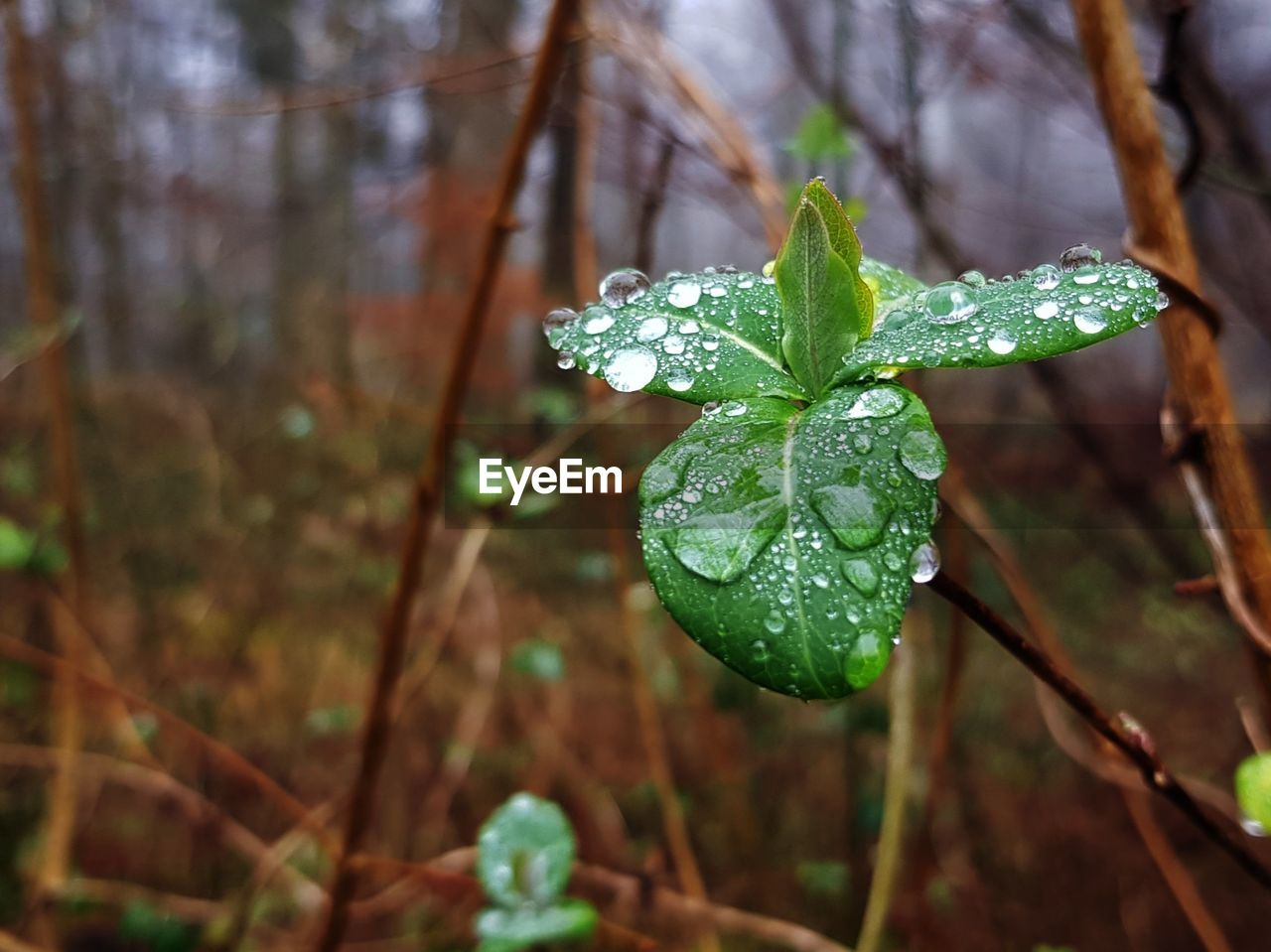 drop, nature, leaf, green color, beauty in nature, focus on foreground, water, close-up, wet, no people, growth, plant, day, freshness, outdoors, fragility