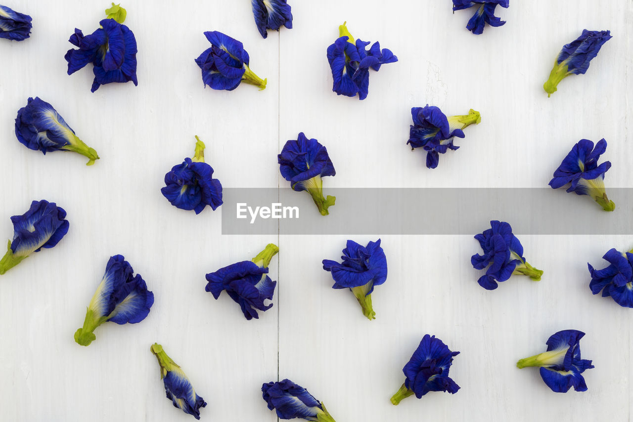 HIGH ANGLE VIEW OF PURPLE AND WHITE FLOWERS AGAINST WALL