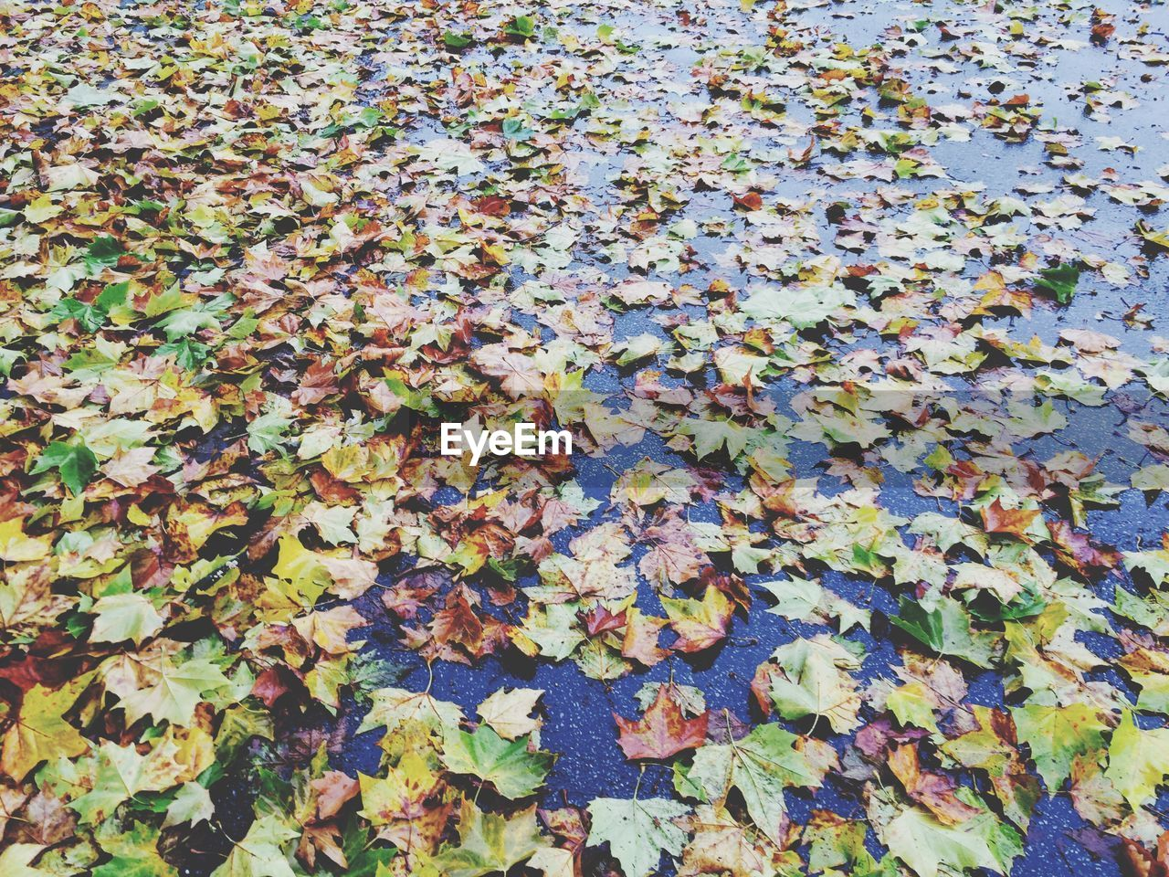 Wet Street Covered By Autumn Leaves