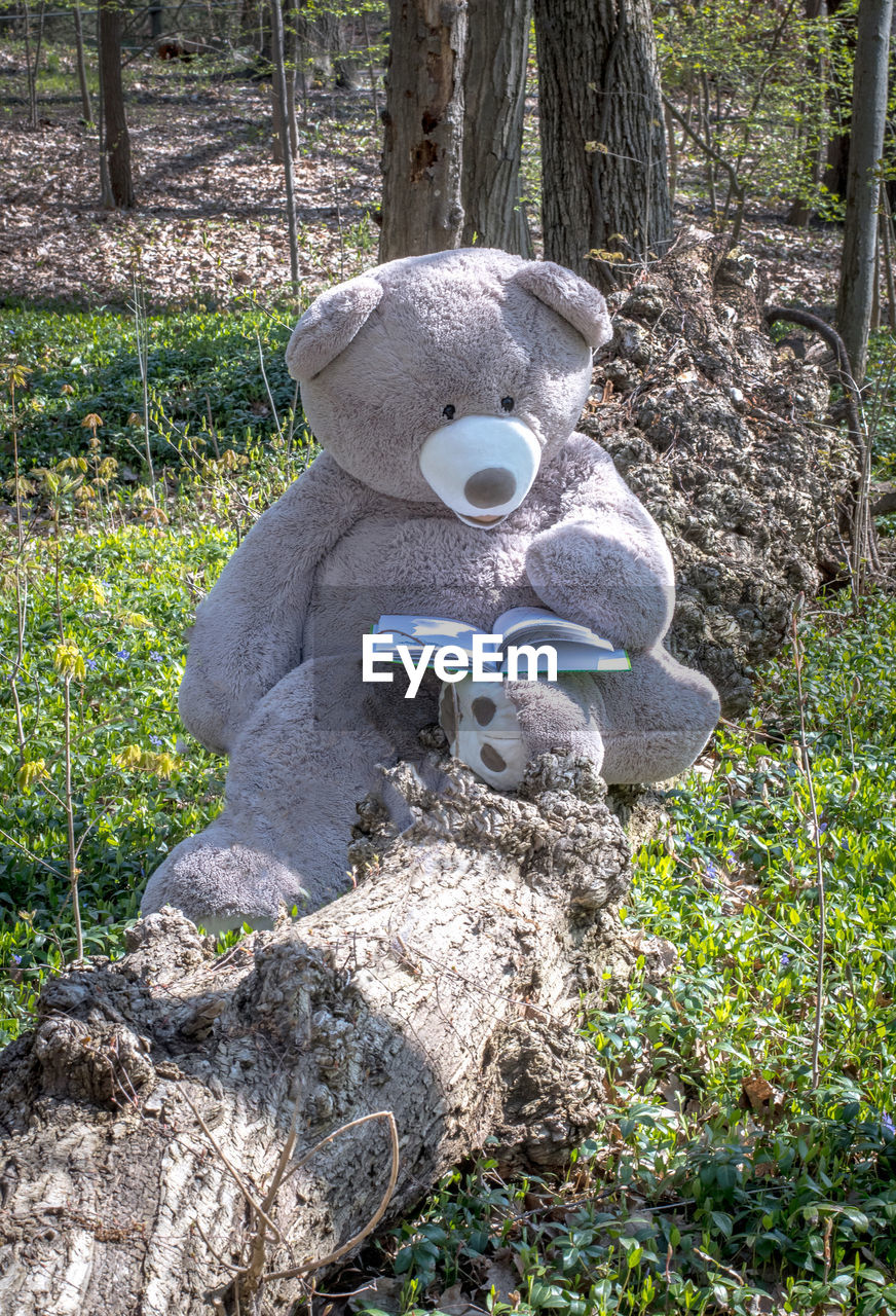 VIEW OF STUFFED TOY ON FIELD