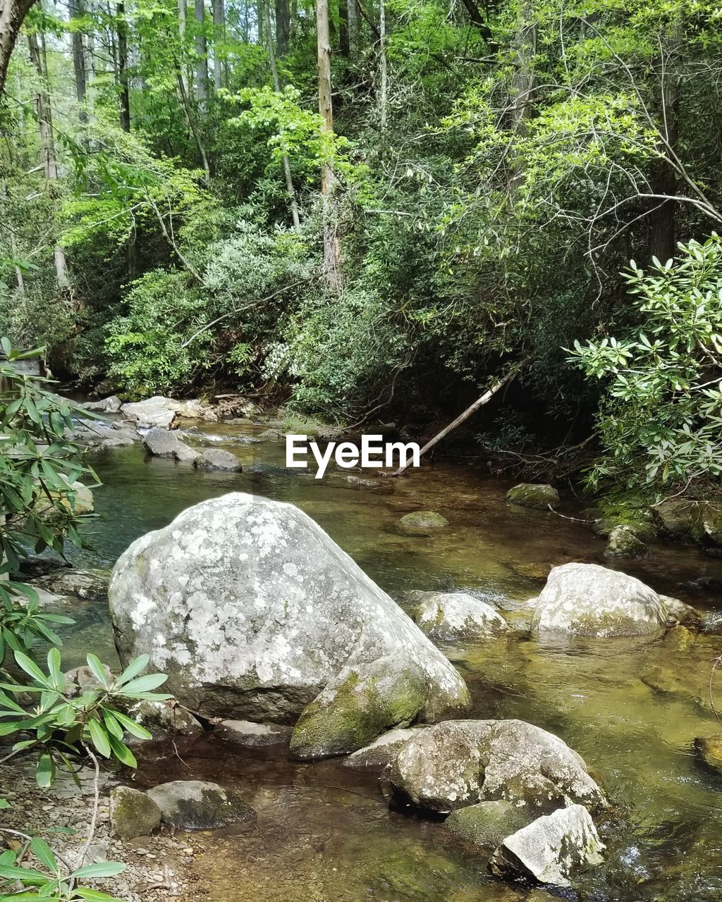 water, forest, plant, tree, rock, solid, tranquility, rock - object, nature, beauty in nature, growth, land, no people, day, scenics - nature, tranquil scene, river, flowing water, outdoors, stream - flowing water, flowing, shallow