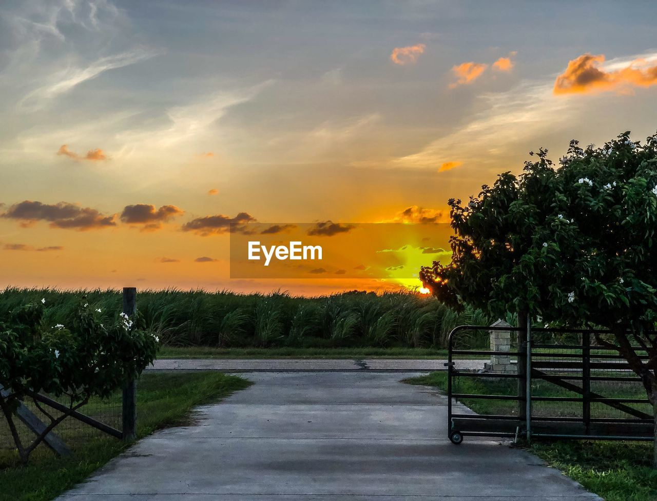 sky, sunset, cloud - sky, plant, tree, beauty in nature, orange color, nature, tranquility, scenics - nature, no people, tranquil scene, road, transportation, growth, the way forward, direction, land, field, outdoors