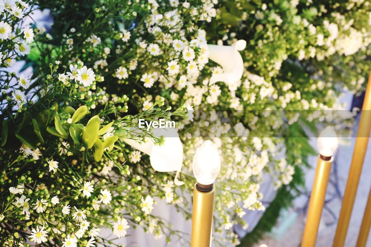 plant, flowering plant, growth, flower, nature, day, no people, sunlight, focus on foreground, white color, beauty in nature, lighting equipment, outdoors, green color, freshness, selective focus, tree, low angle view, close-up, fragility