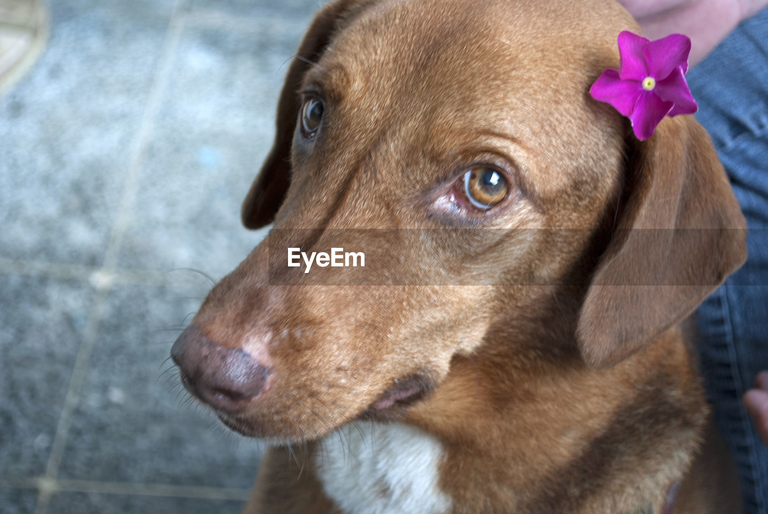 High angle view of dog with flower