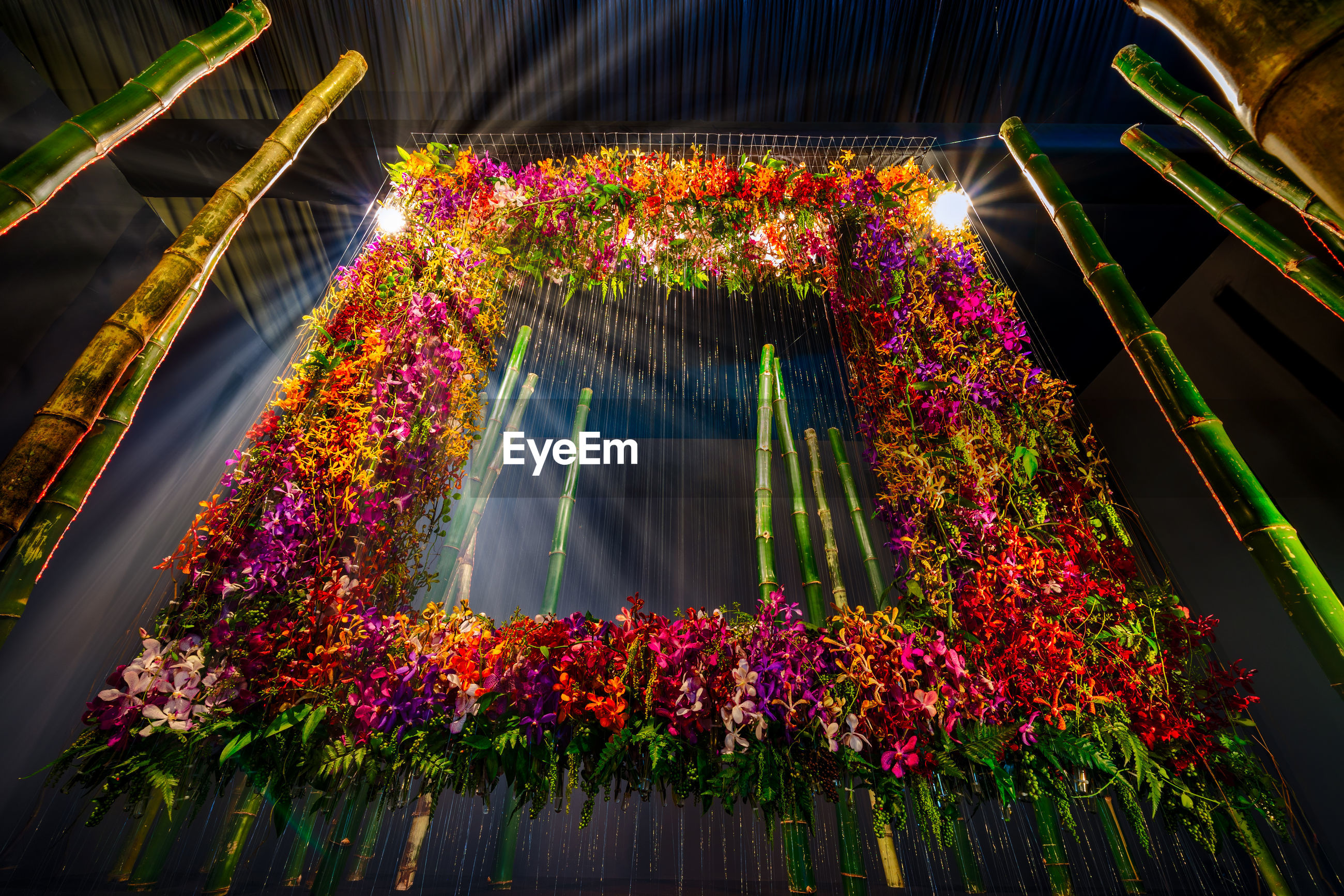LOW ANGLE VIEW OF FLOWERING PLANTS ON ILLUMINATED STREET