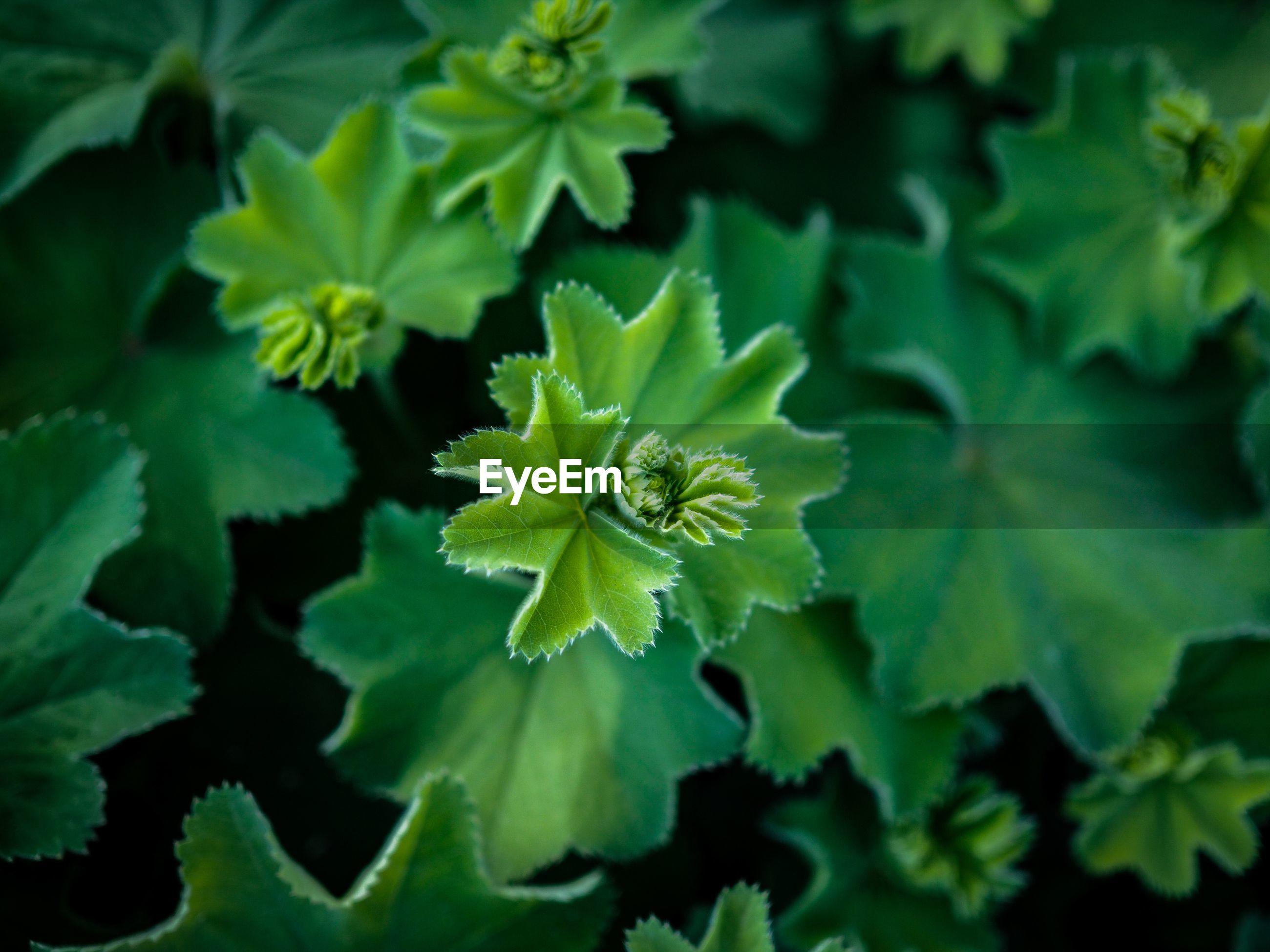 HIGH ANGLE VIEW OF GREEN PLANT ON LEAF