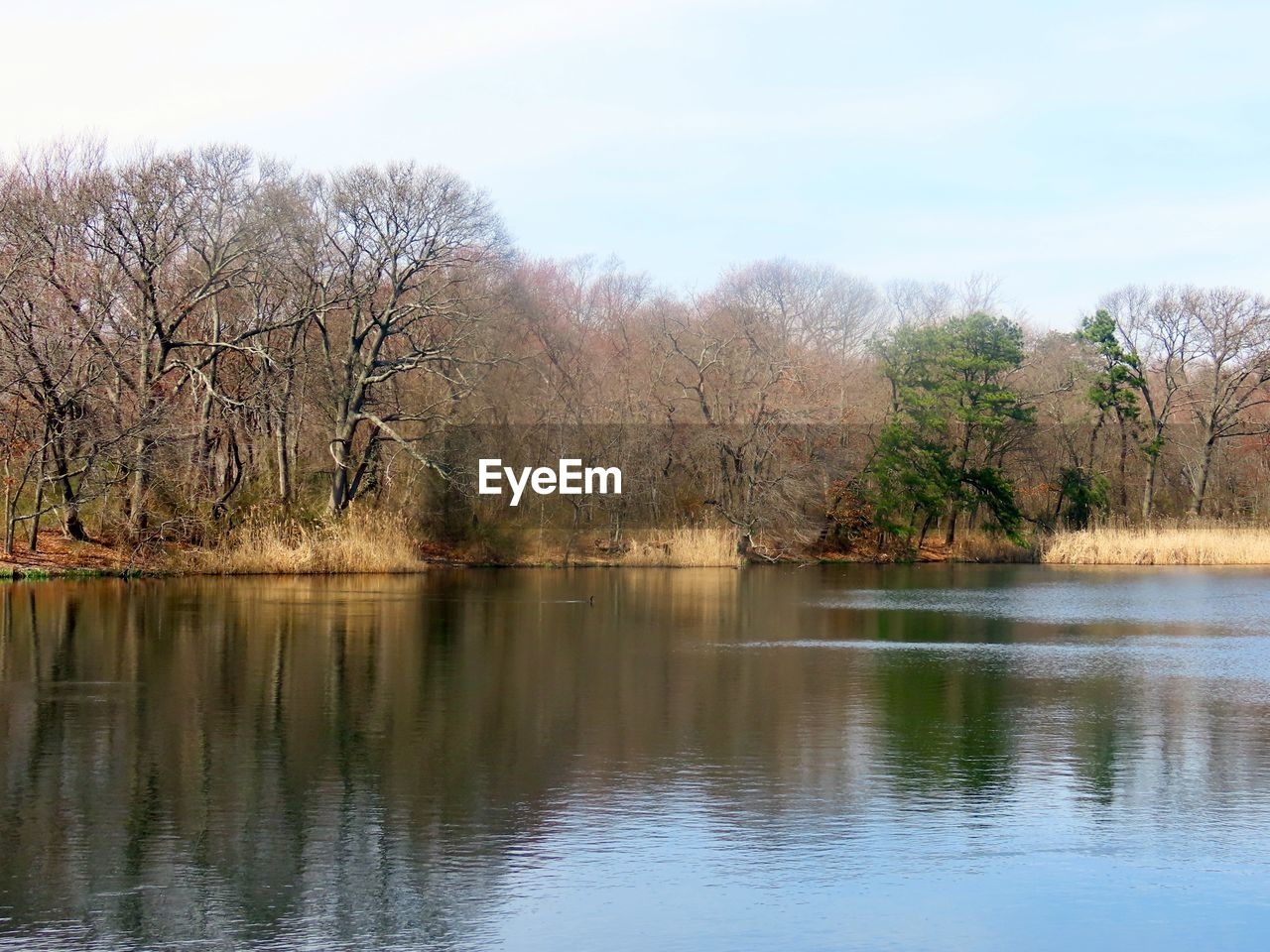 water, tree, sky, lake, plant, reflection, beauty in nature, tranquility, scenics - nature, tranquil scene, waterfront, no people, nature, day, non-urban scene, growth, idyllic, bare tree, outdoors