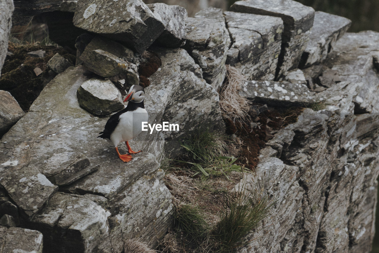 HIGH ANGLE VIEW OF DUCK PERCHING ON ROCK