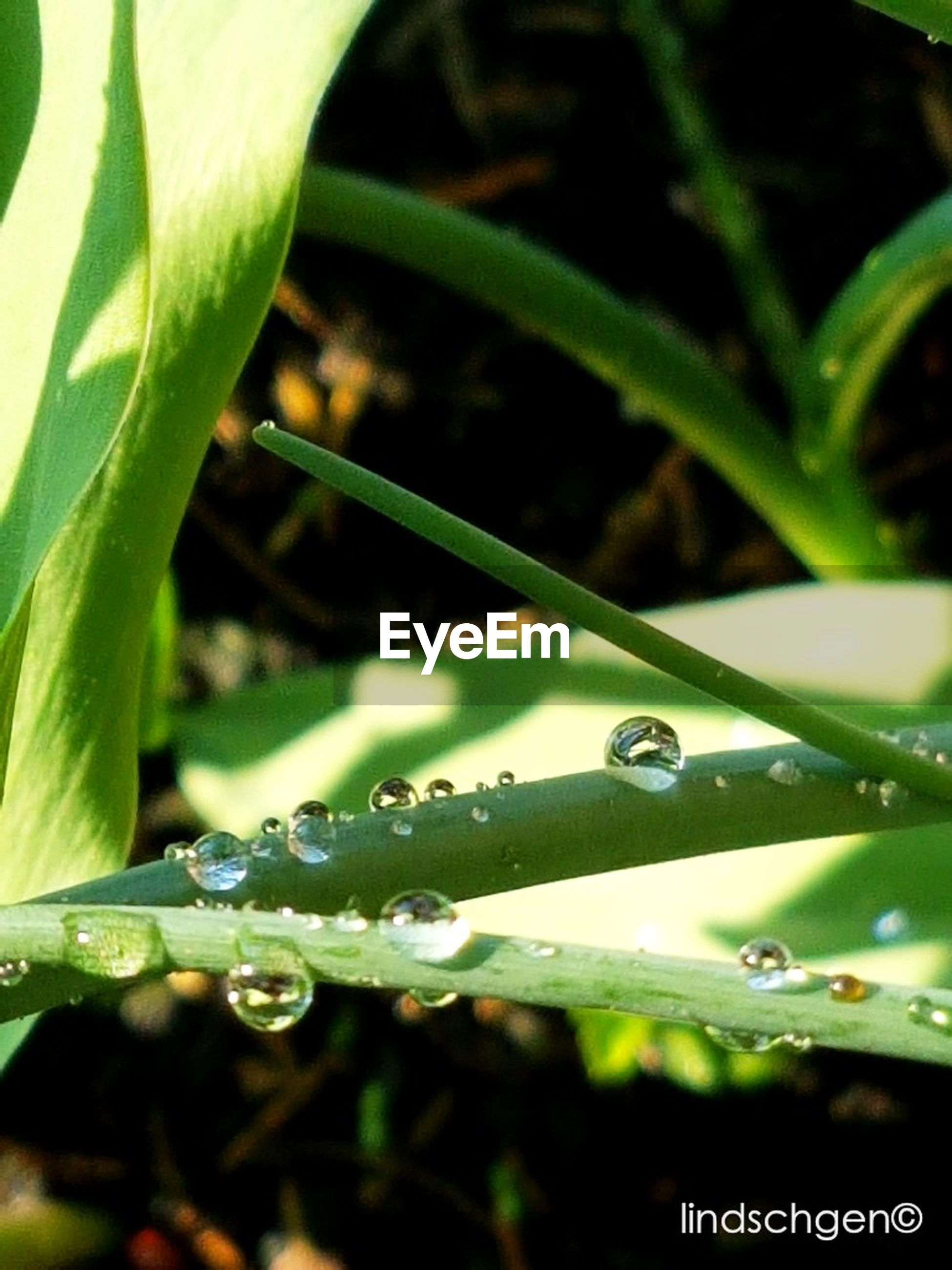 nature, drop, growth, plant, focus on foreground, leaf, green color, no people, close-up, beauty in nature, animal themes, outdoors, insect, wet, fragility, one animal, day, freshness, water, animals in the wild
