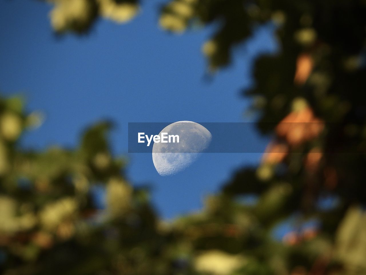 sky, moon, beauty in nature, astronomy, space, low angle view, no people, nature, tranquility, tree, night, focus on background, blue, scenics - nature, outdoors, selective focus, plant, tranquil scene, planetary moon, clear sky
