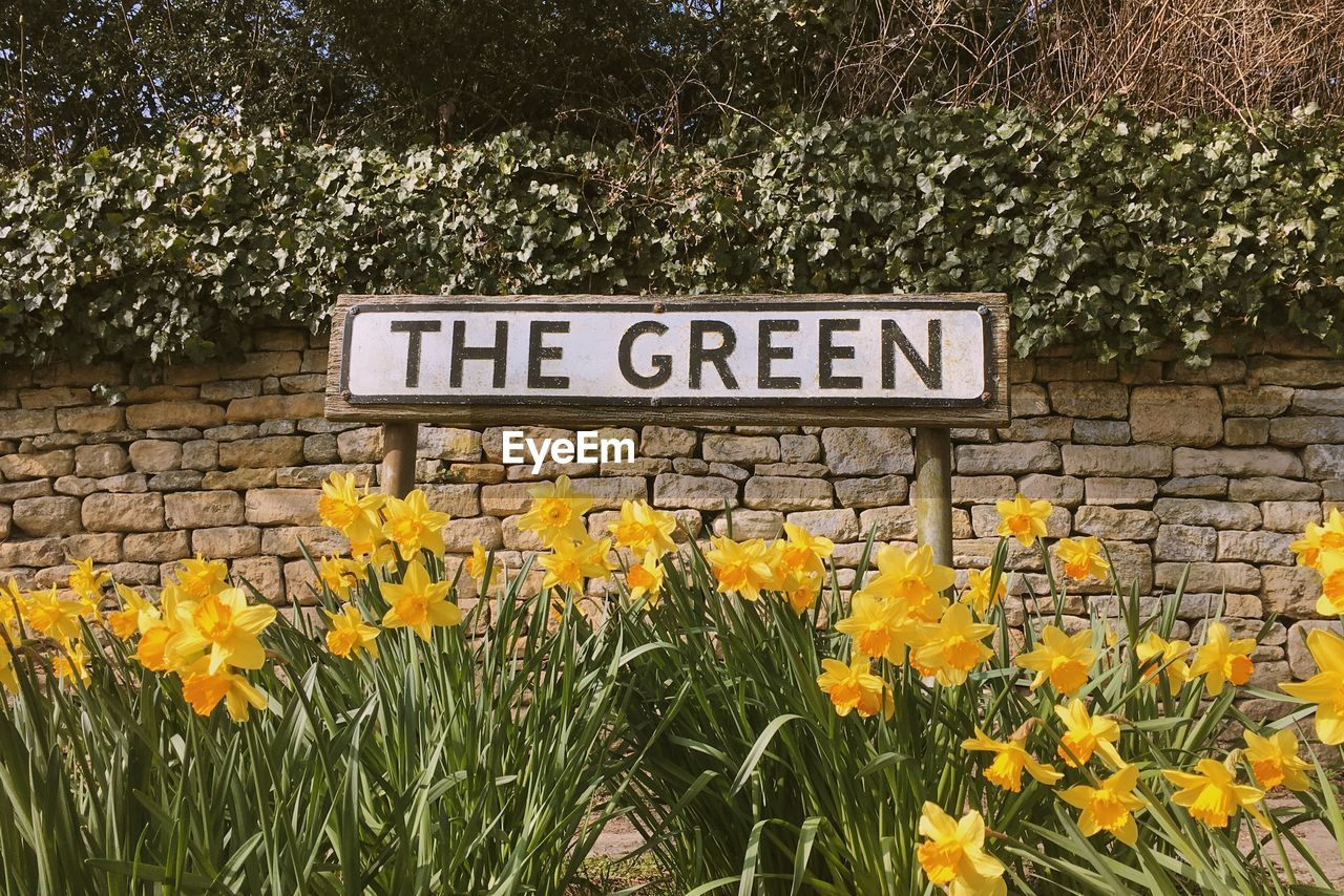 Sign Amidst Yellow Daffodils In Garden