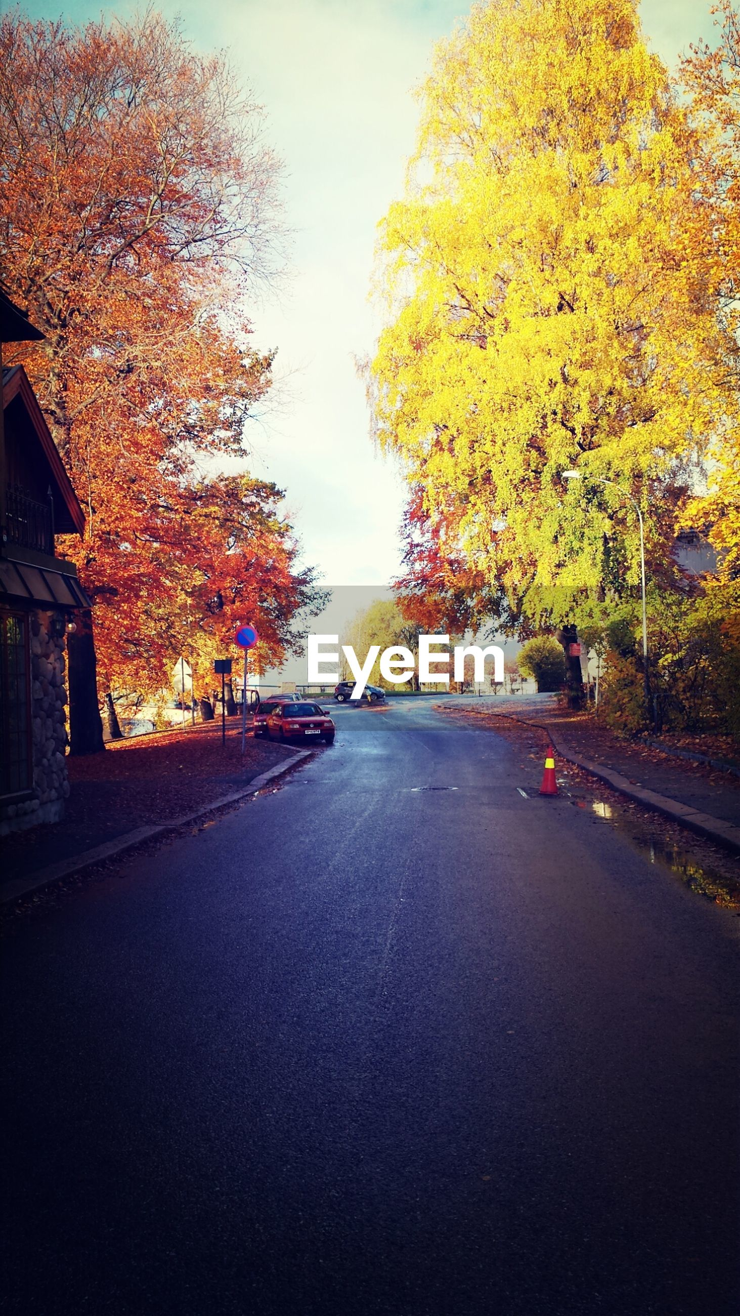 Street amidst autumn trees