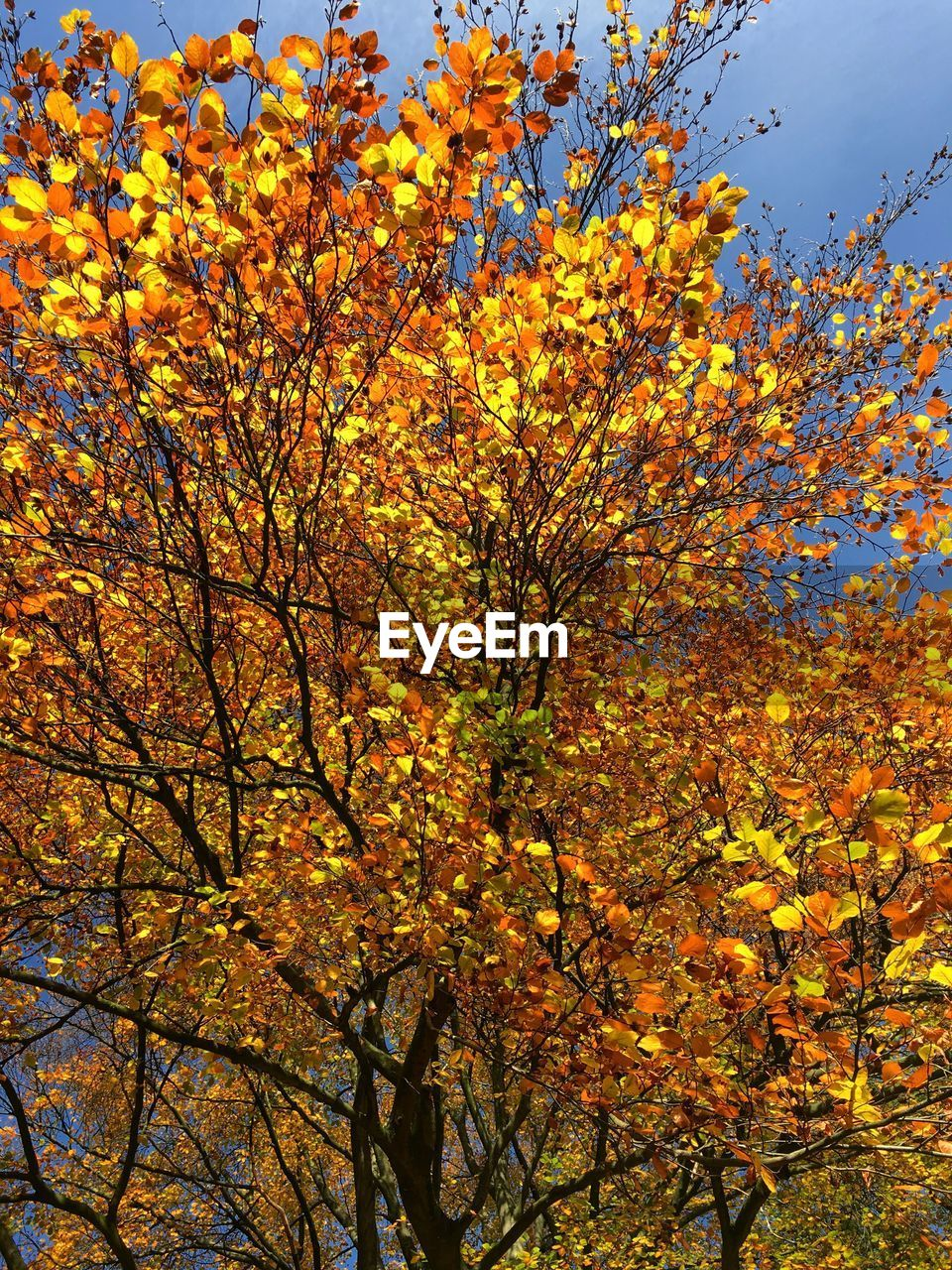 tree, beauty in nature, autumn, nature, growth, branch, flower, blossom, no people, low angle view, change, day, fragility, tranquility, outdoors, scenics, springtime, freshness, sky, close-up