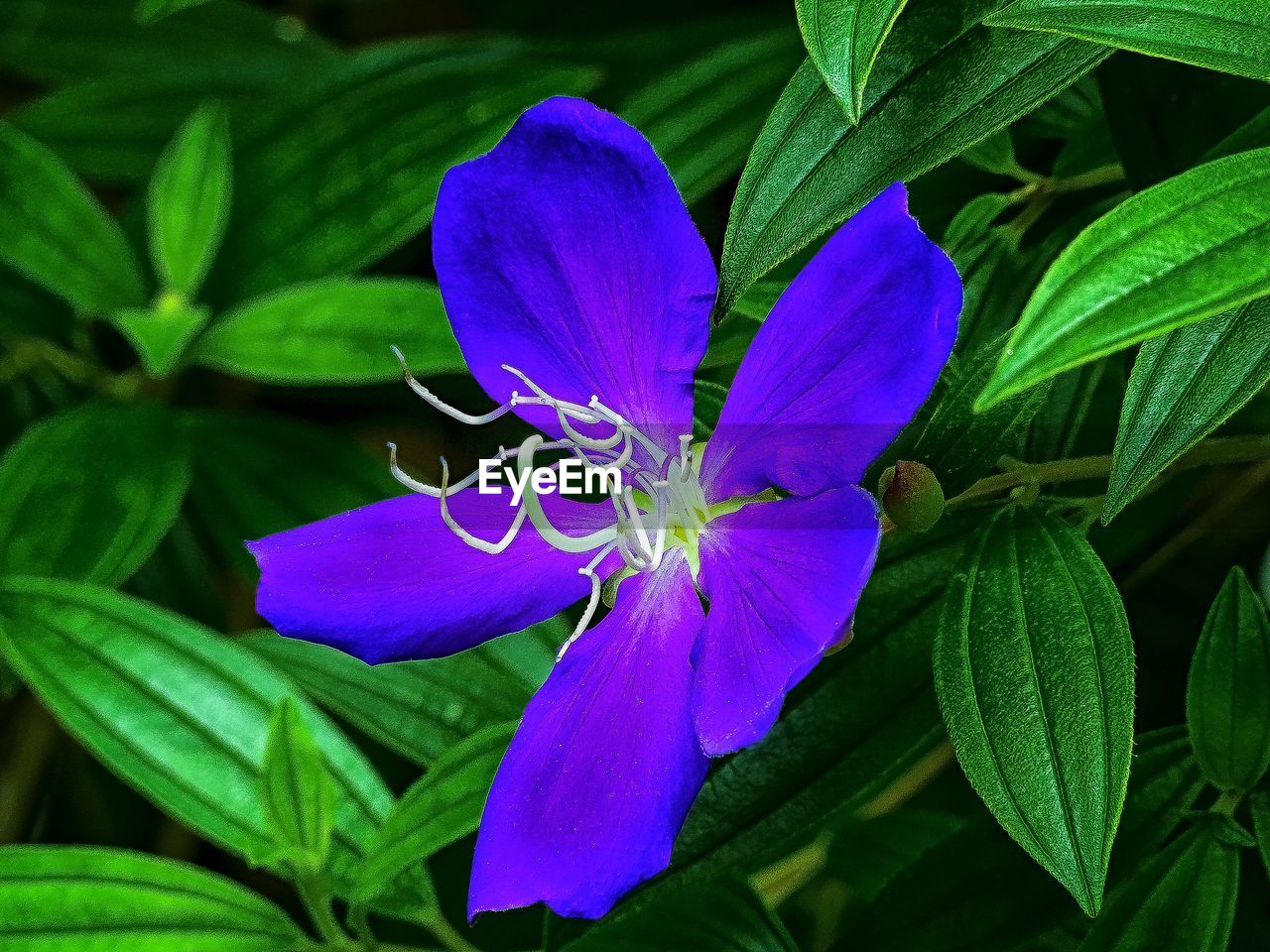 flower, petal, growth, fragility, nature, beauty in nature, leaf, flower head, freshness, plant, green color, no people, purple, day, blooming, outdoors, close-up, blue, passion flower, periwinkle