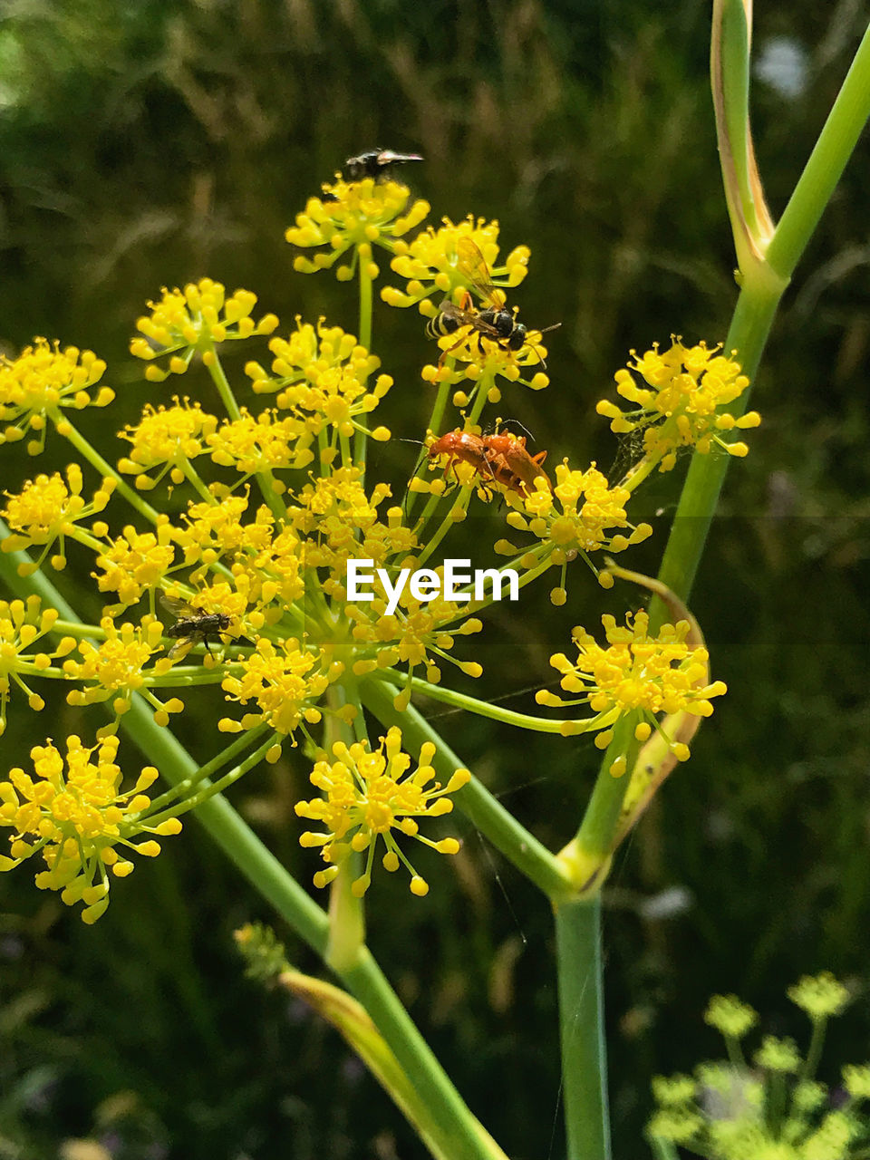 flowering plant, flower, plant, growth, freshness, fragility, vulnerability, beauty in nature, yellow, close-up, focus on foreground, flower head, nature, petal, day, inflorescence, no people, field, outdoors, selective focus, pollen
