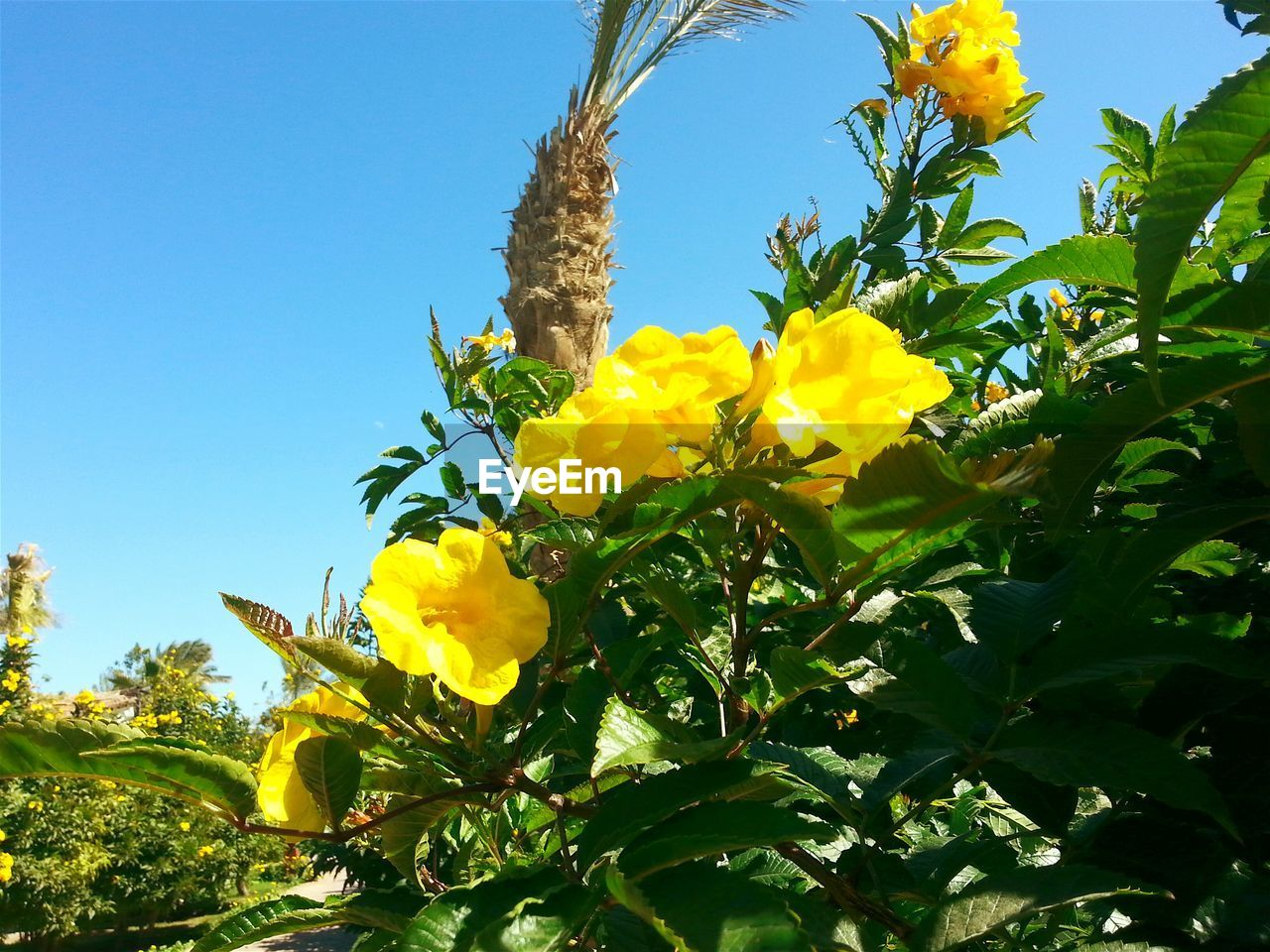 flower, growth, yellow, nature, plant, freshness, beauty in nature, leaf, green color, low angle view, fragility, day, outdoors, no people, tree, clear sky, flower head, blooming, sky, close-up