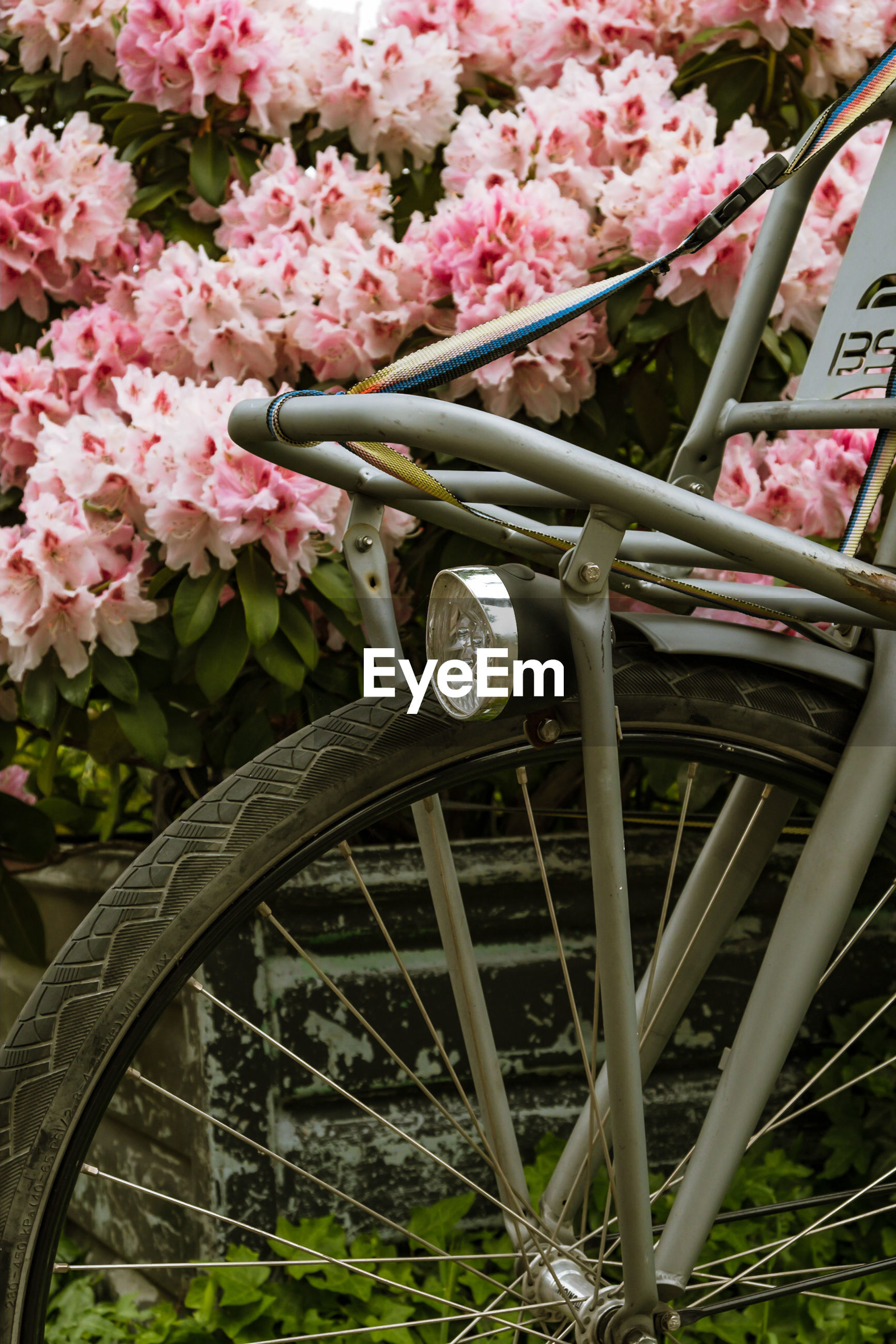 plant, flower, flowering plant, pink color, freshness, growth, nature, day, transportation, fragility, beauty in nature, land vehicle, mode of transportation, vulnerability, close-up, no people, outdoors, bicycle, springtime, basket, gardening, wheel, spoke