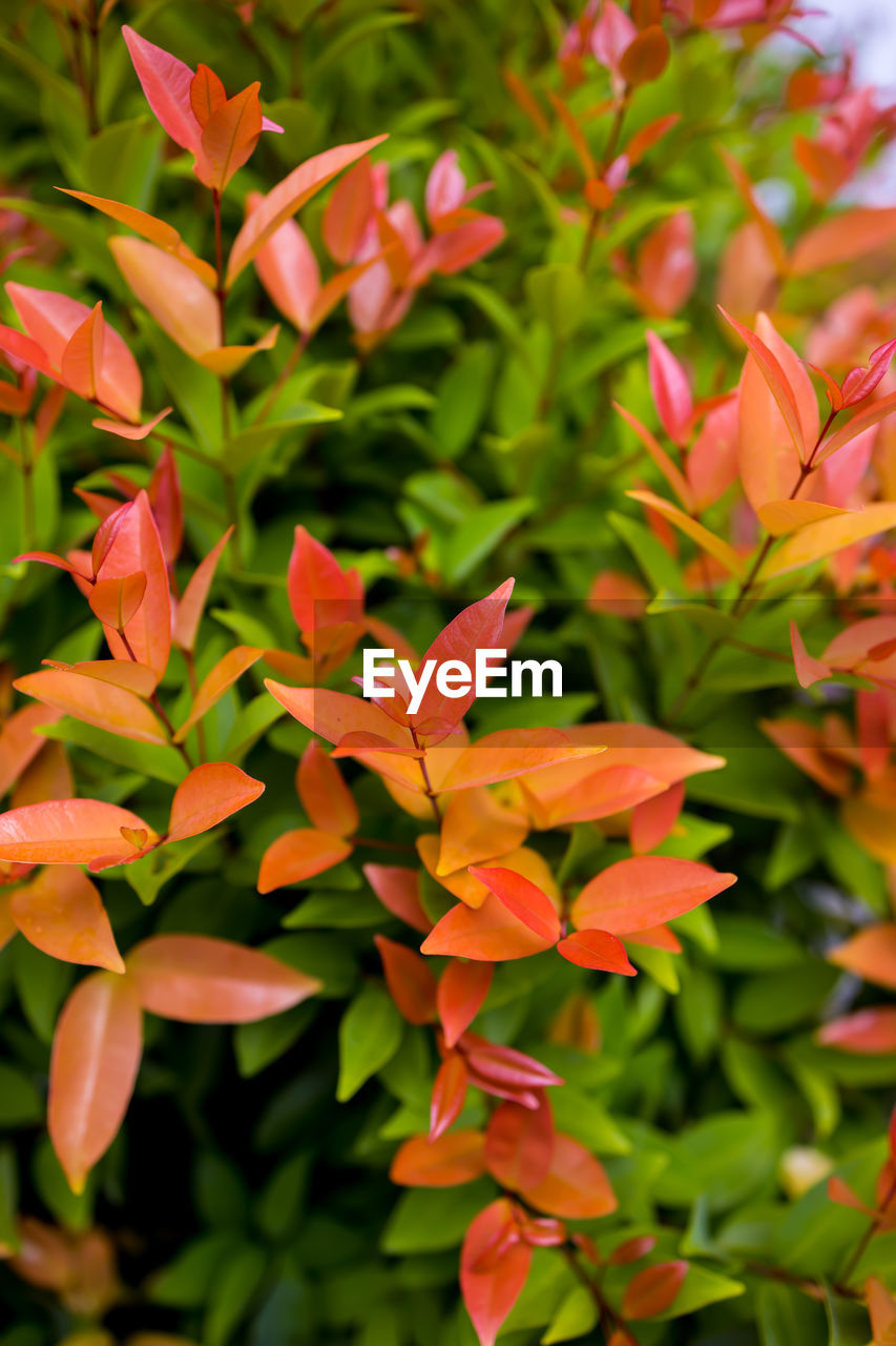 plant, growth, beauty in nature, flower, flowering plant, freshness, close-up, vulnerability, petal, flower head, fragility, no people, inflorescence, leaf, day, nature, plant part, orange color, focus on foreground, green color, outdoors