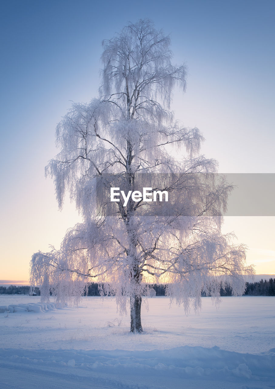 snow, cold temperature, winter, tree, sky, plant, beauty in nature, tranquility, environment, scenics - nature, nature, covering, tranquil scene, bare tree, deep snow, no people, field, landscape, land, outdoors, cold, isolated