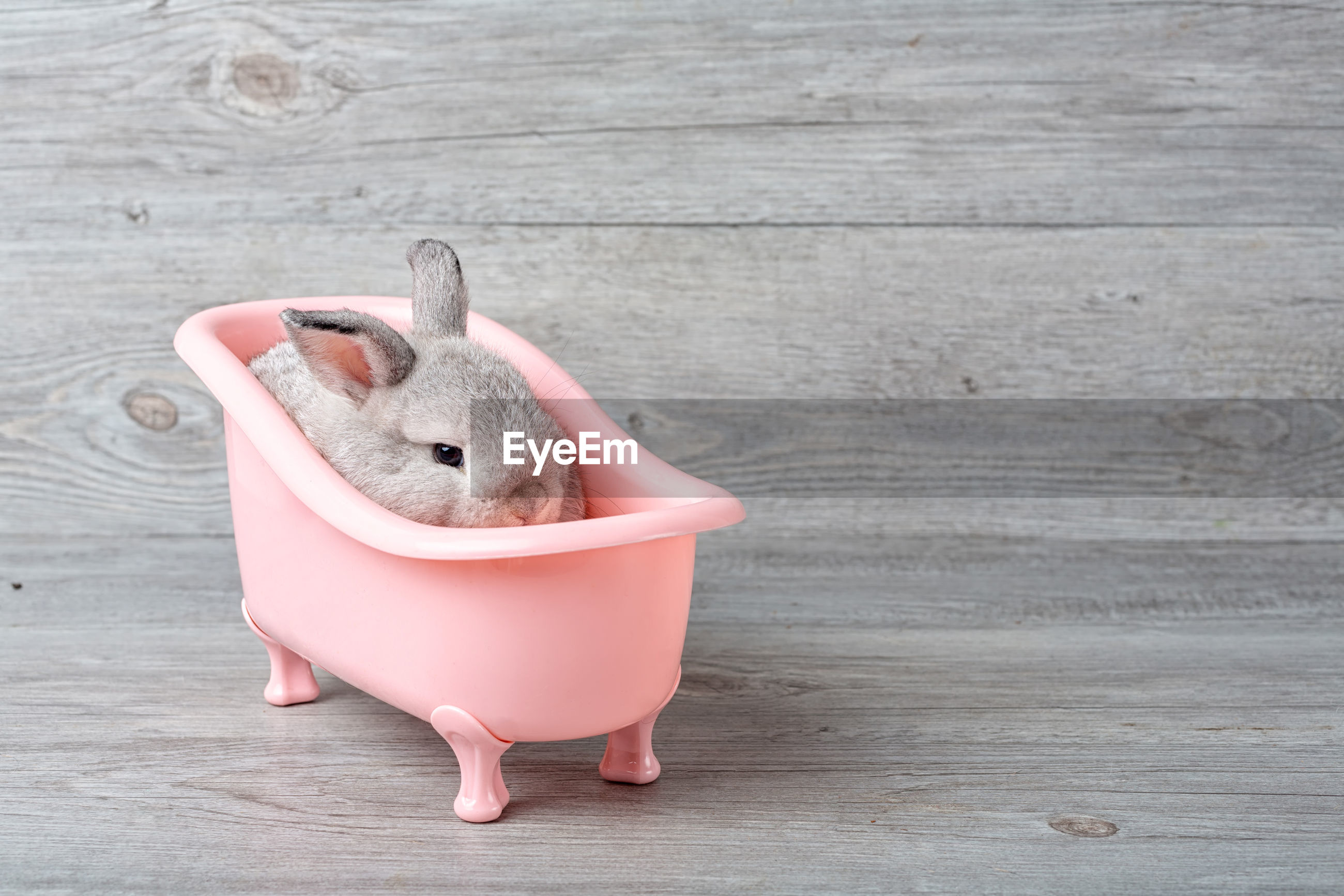 Rabbit in the bathtub placed on a wooden floor. happy easter fancy rabbit on a wooden background.