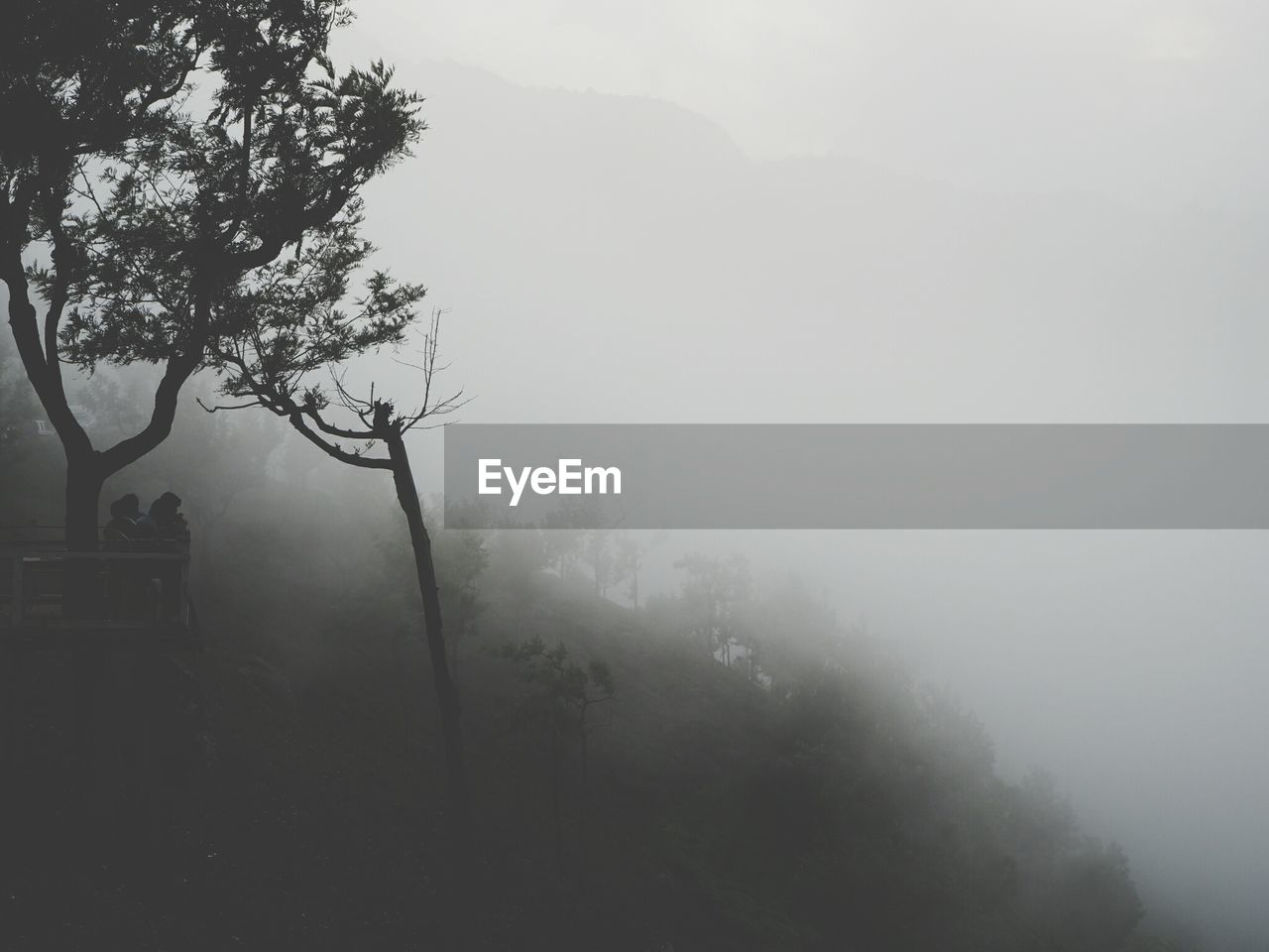 fog, mist, tree, hazy, nature, foggy, tranquility, beauty in nature, tranquil scene, weather, no people, idyllic, outdoors, scenics, landscape, branch, day, growth, mountain, sky