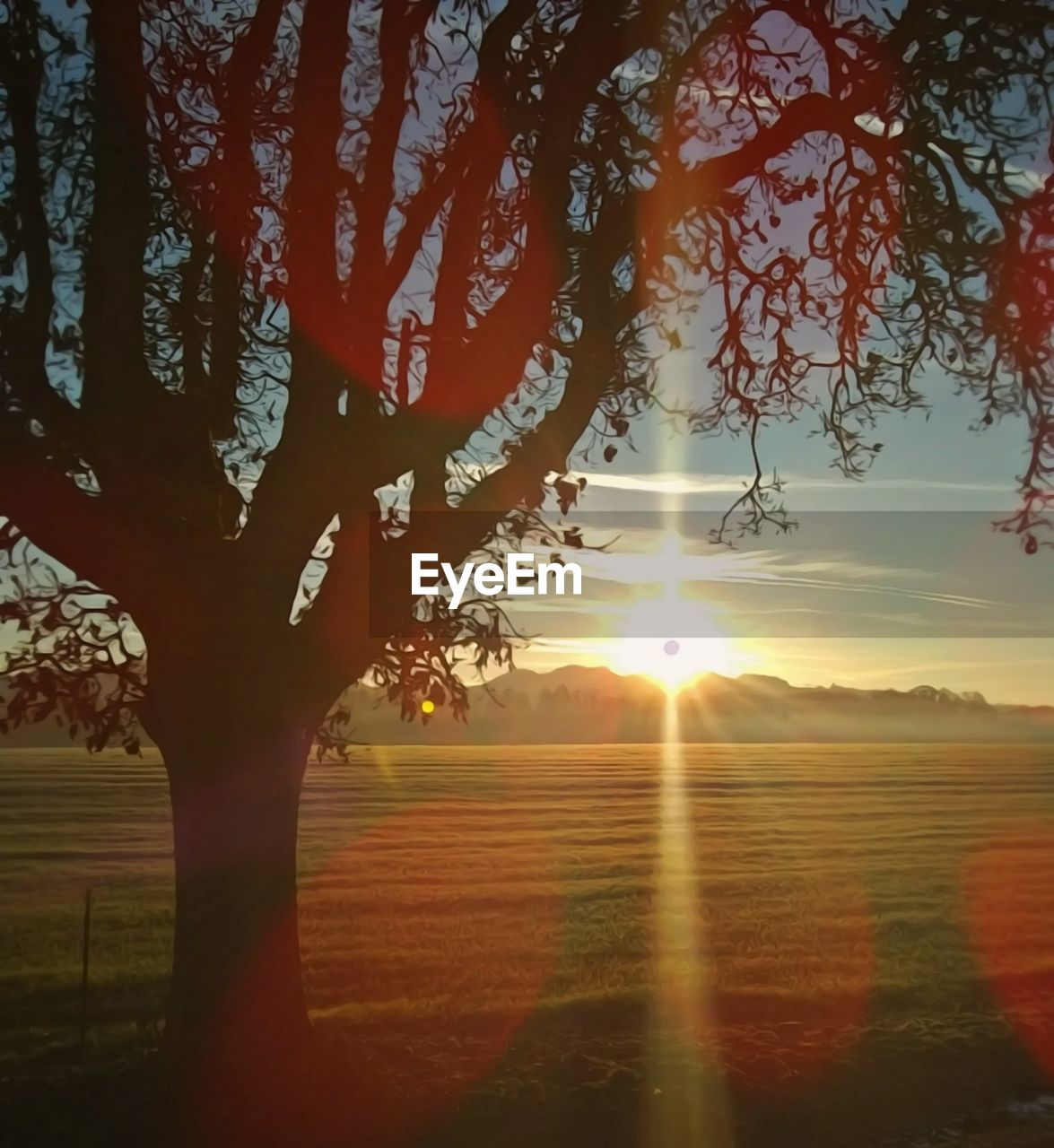 sky, sun, beauty in nature, tranquil scene, sunset, sunlight, tranquility, tree, scenics - nature, nature, sunbeam, plant, landscape, orange color, environment, field, lens flare, no people, idyllic, land, outdoors, bright
