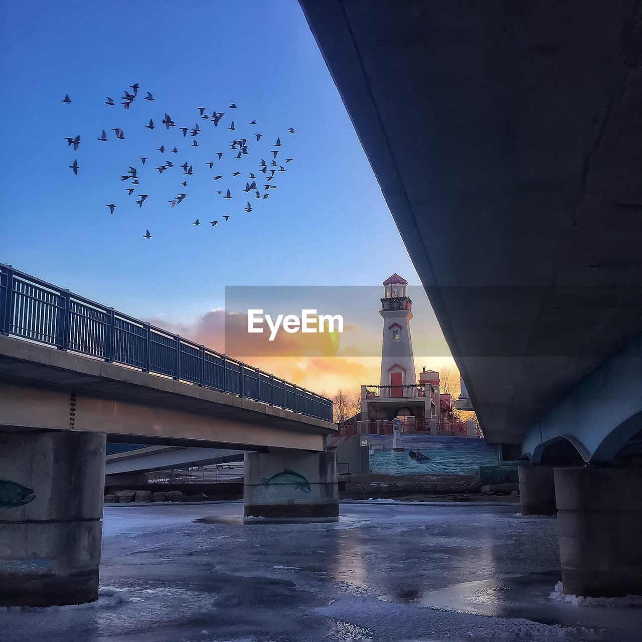 bridge - man made structure, connection, large group of animals, architecture, bird, built structure, river, flying, flock of birds, sky, animal themes, water, outdoors, architectural column, no people, nature, animals in the wild, day