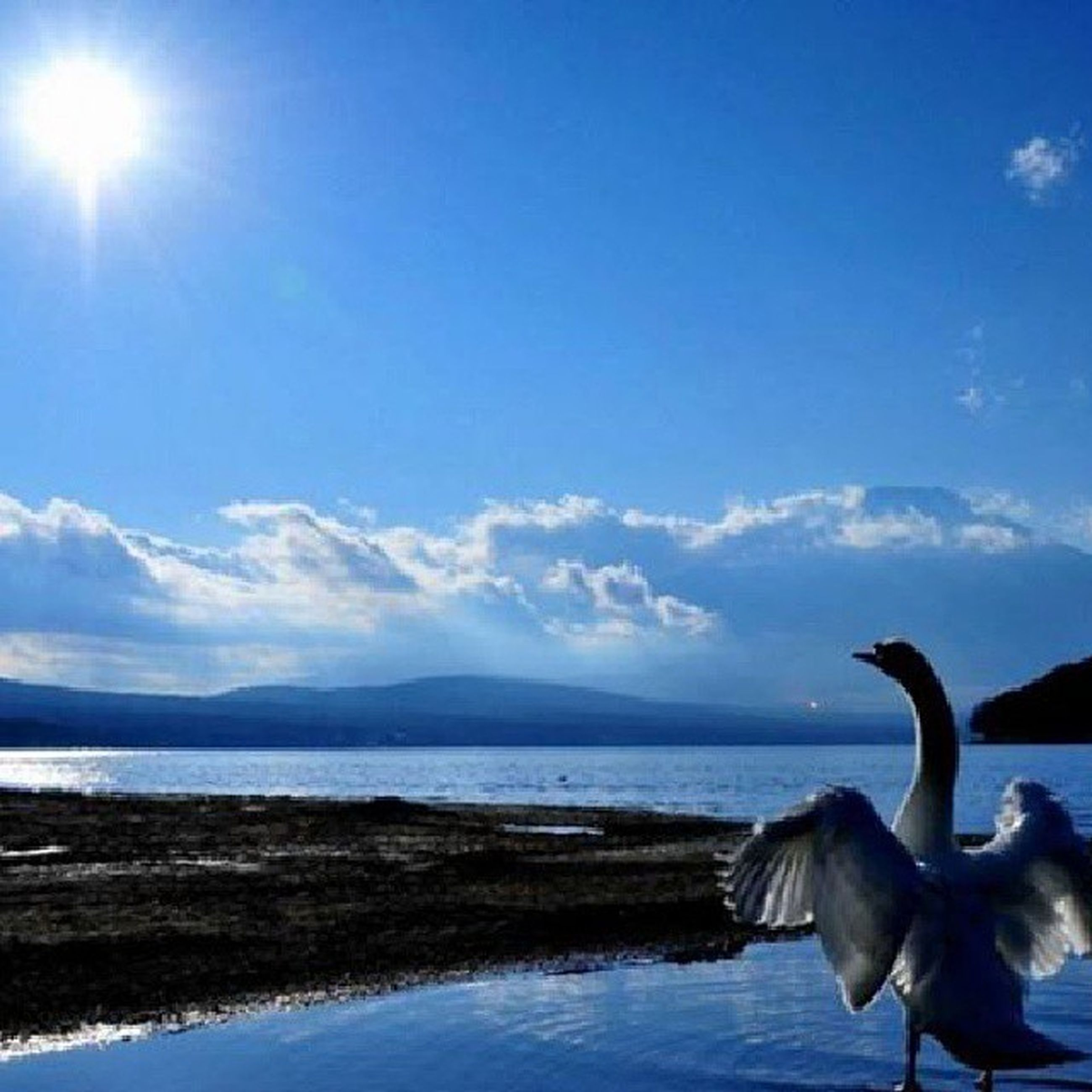 bird, water, sky, animal themes, sea, animals in the wild, wildlife, seagull, beauty in nature, nature, cloud - sky, cloud, blue, tranquility, scenics, tranquil scene, sunlight, sun, horizon over water, flying