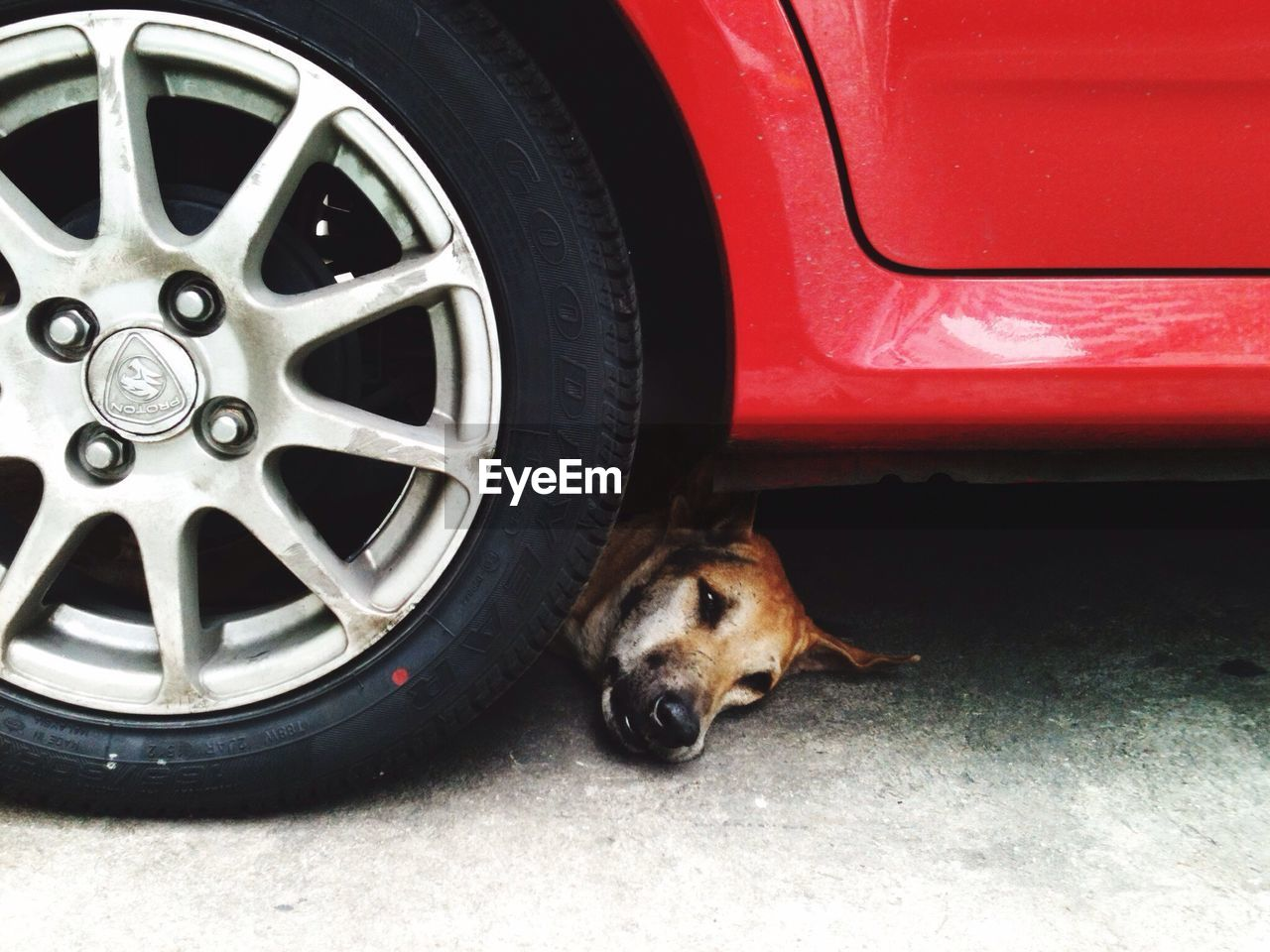 Close-Up Of Dog Under Car
