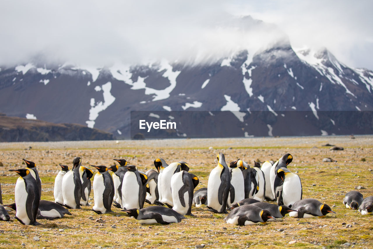 Penguins On Field Against Mountains During Winter
