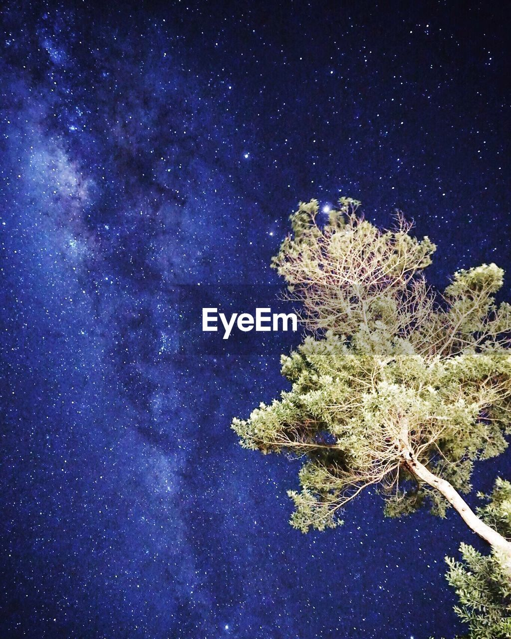 night, blue, plant, nature, no people, beauty in nature, coral, tranquility, undersea, star - space, scenics, outdoors, galaxy, close-up, sky, tree, space, astronomy