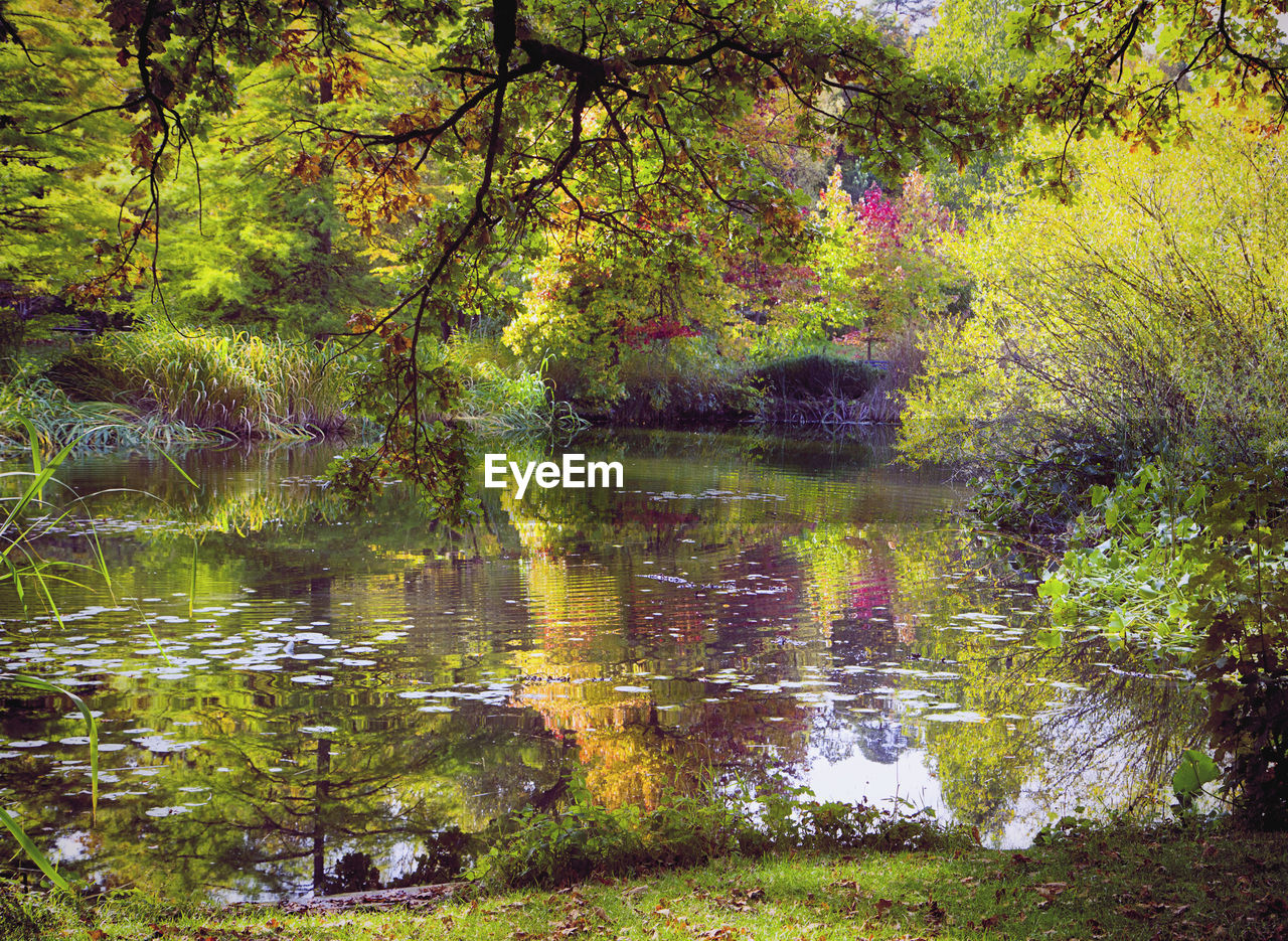 reflection, water, nature, lake, forest, tree, growth, tranquility, tranquil scene, no people, outdoors, day, autumn, beauty in nature