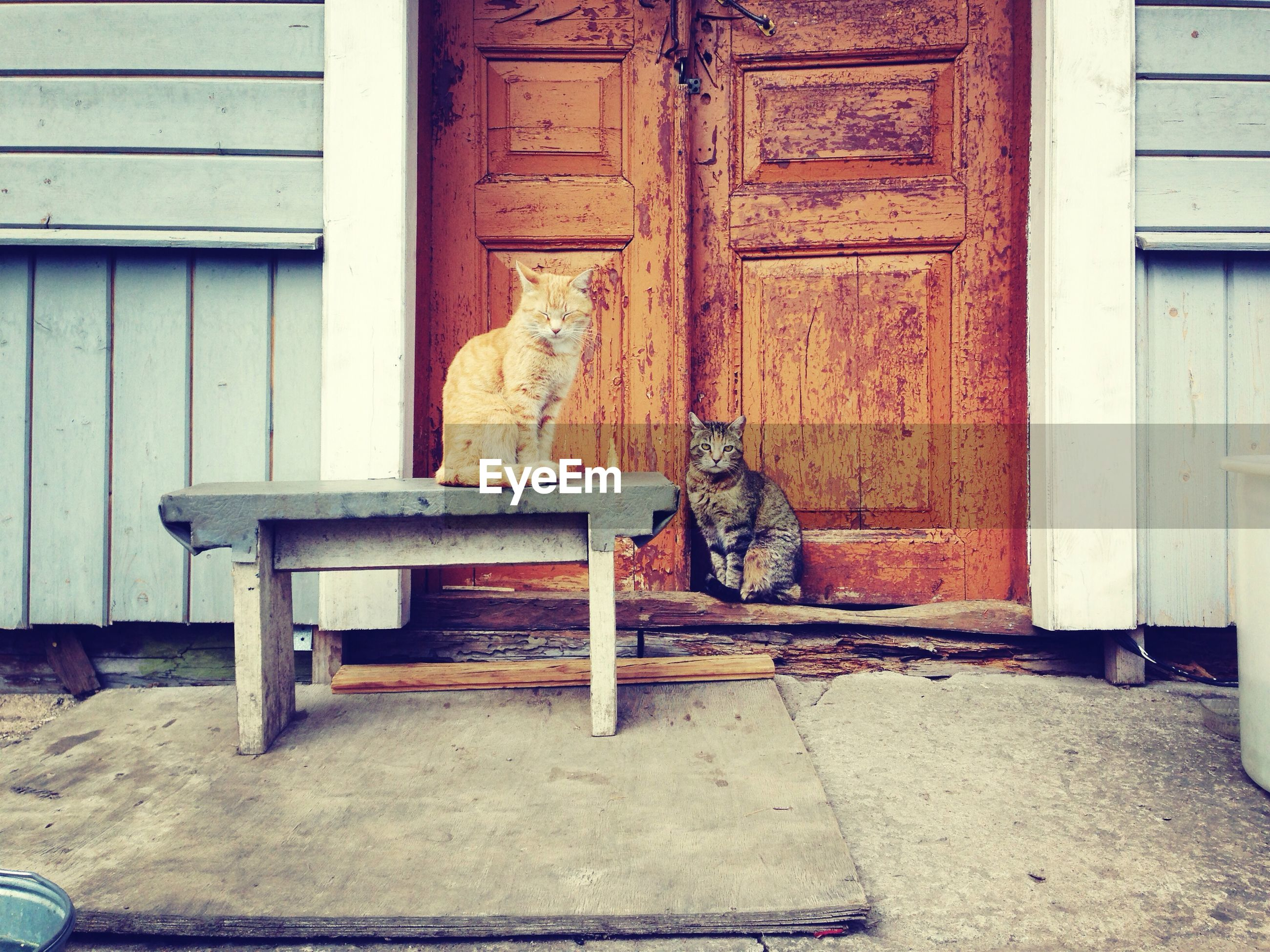 Two cats sitting on table in front of closed door