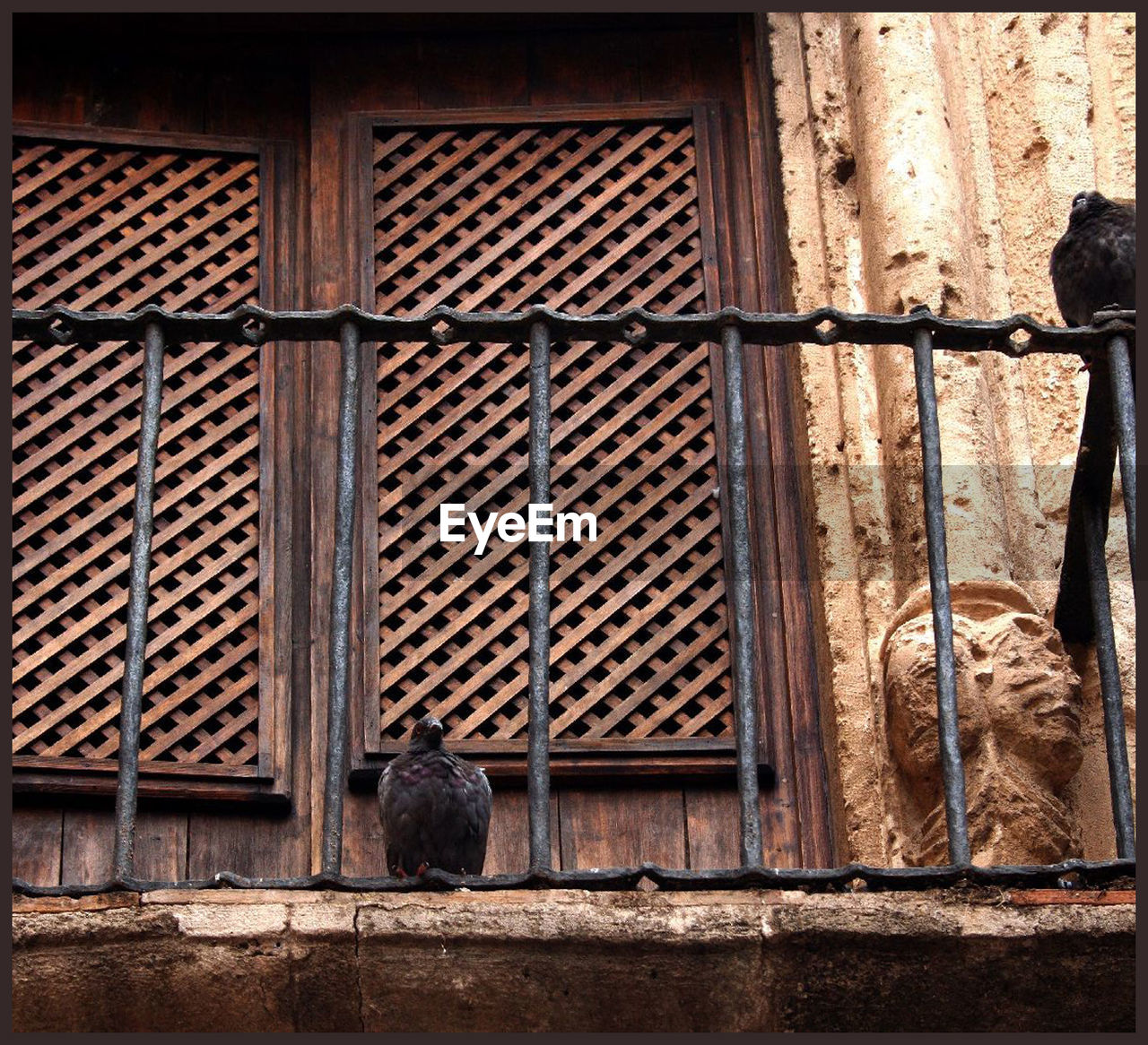 day, architecture, no people, window, outdoors, animal themes, bird, mammal, close-up