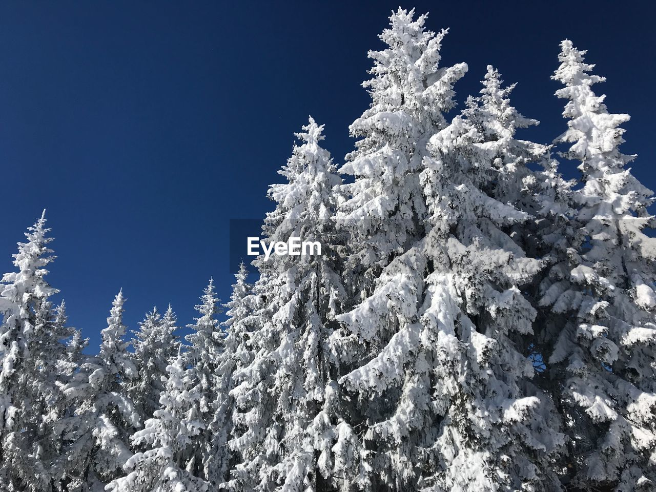 nature, winter, low angle view, cold temperature, snow, beauty in nature, day, no people, outdoors, tranquility, tree, clear sky, sunlight, scenics, blue, growth, sky, mountain