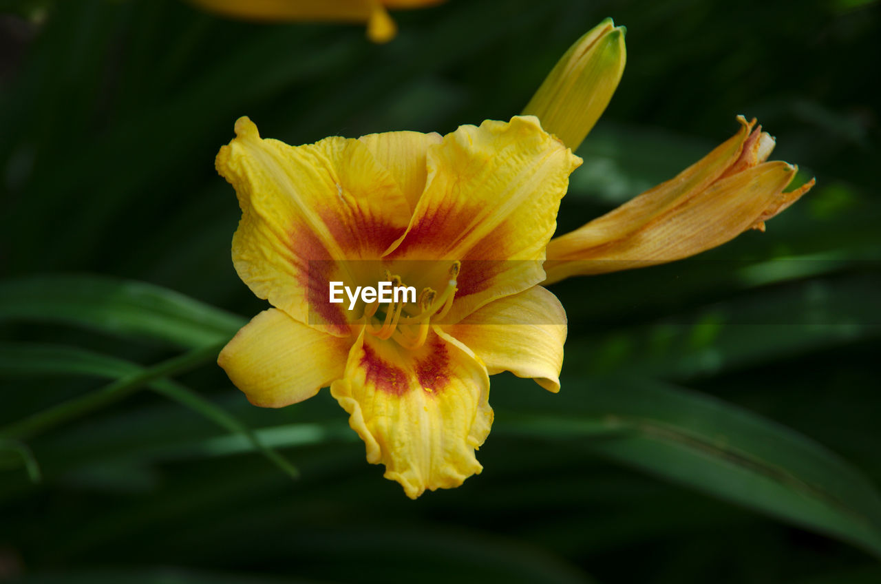 flower, petal, fragility, flower head, beauty in nature, growth, freshness, nature, yellow, no people, pollen, close-up, plant, stamen, day lily, day, outdoors, blooming