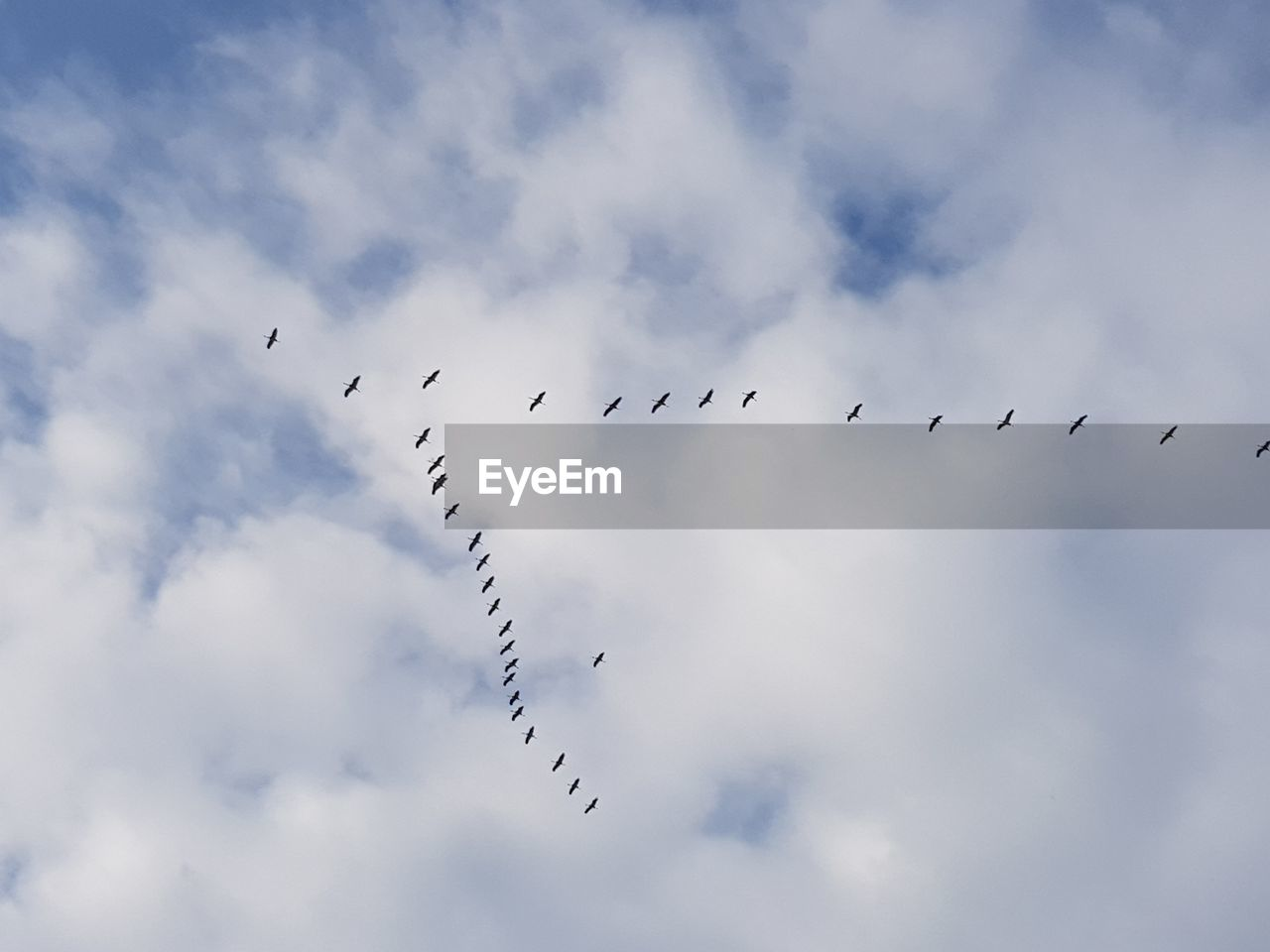 cloud - sky, animal wildlife, sky, animals in the wild, bird, flying, low angle view, group of animals, large group of animals, vertebrate, animal, flock of birds, animal themes, no people, day, nature, order, beauty in nature, outdoors, motion, plane