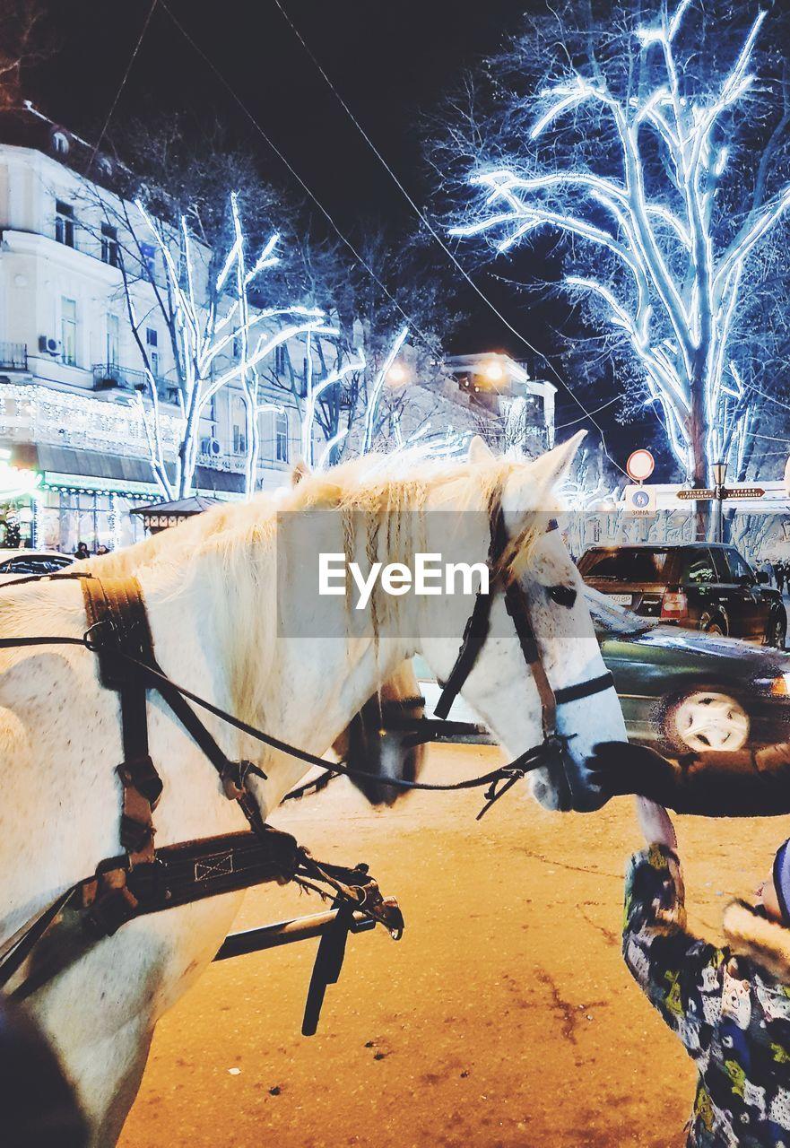 night, illuminated, outdoors, transportation, no people, snow, mammal, city, building exterior, animal themes